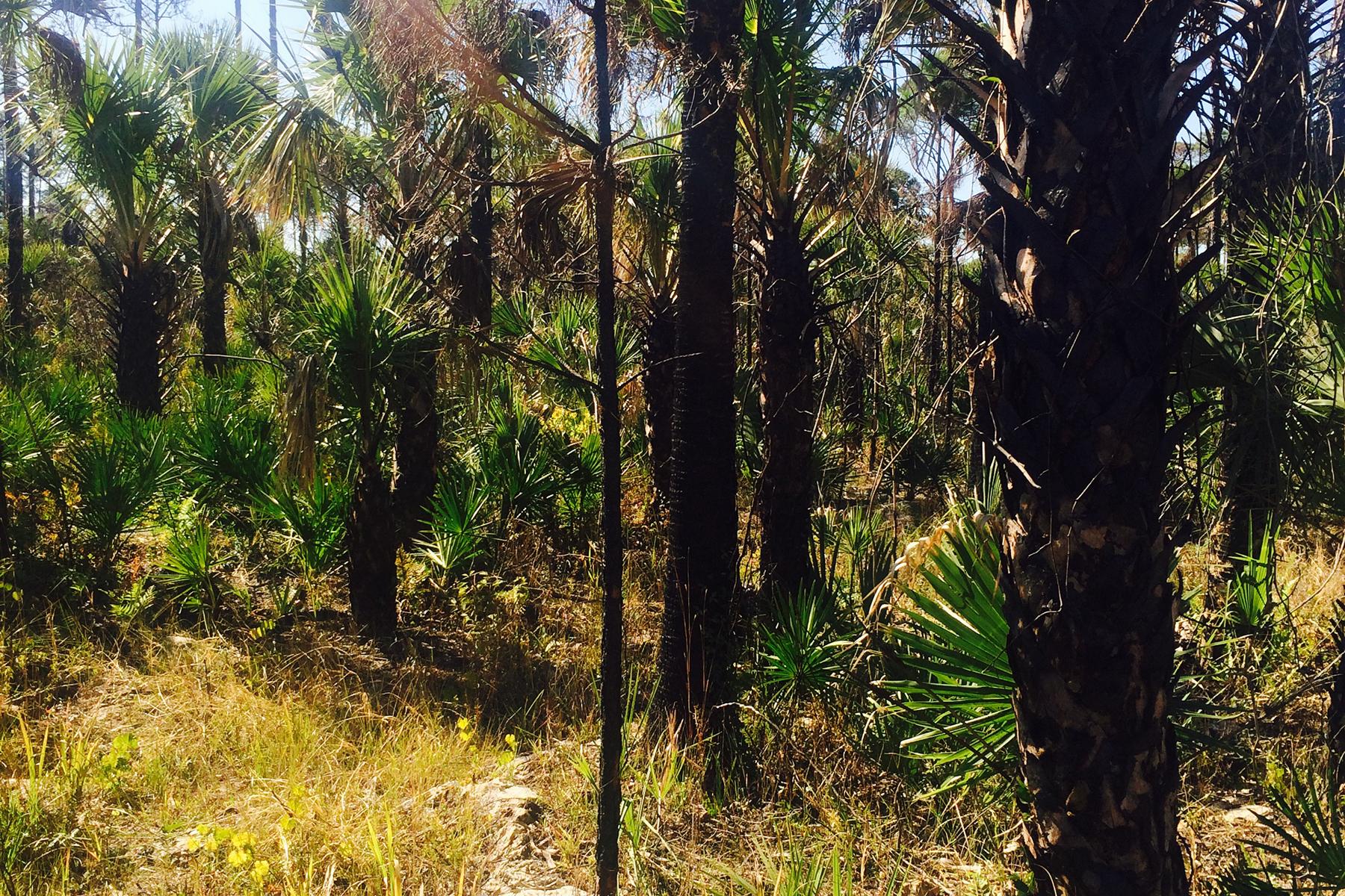 Terrain pour l Vente à FORT MYERS Woodland Grade Rd Naples, Florida 34117 États-Unis