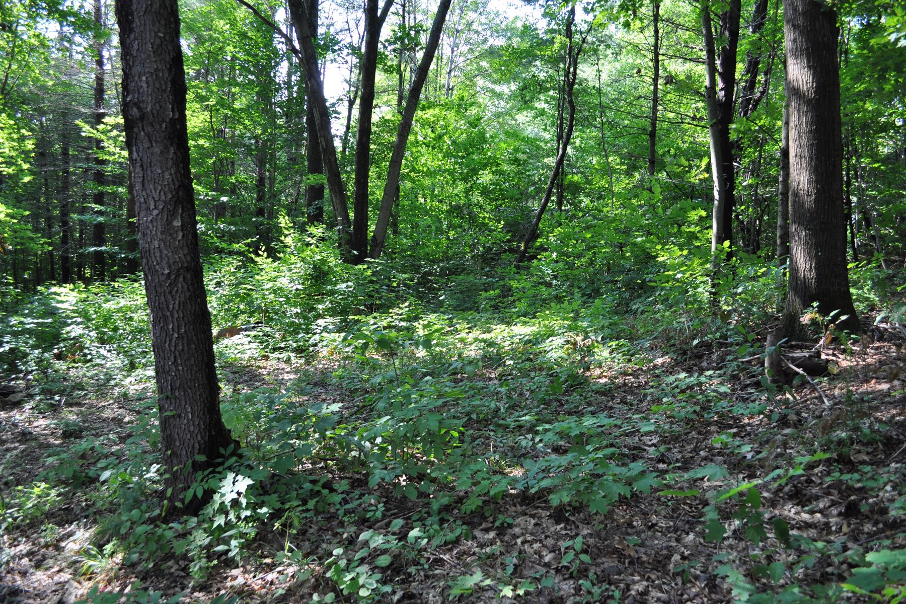 Land for Sale at Enjoy Blodgetts Landing Lot 26 Perry Ct Newbury, New Hampshire 03255 United States