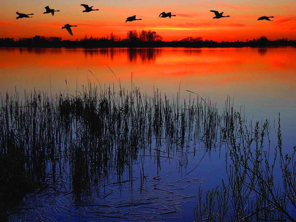 Terreno para Venda às ORLANDO - LONGWOOD 350 Peninsula Island Pt 1 Longwood, Florida, 32750 Estados Unidos
