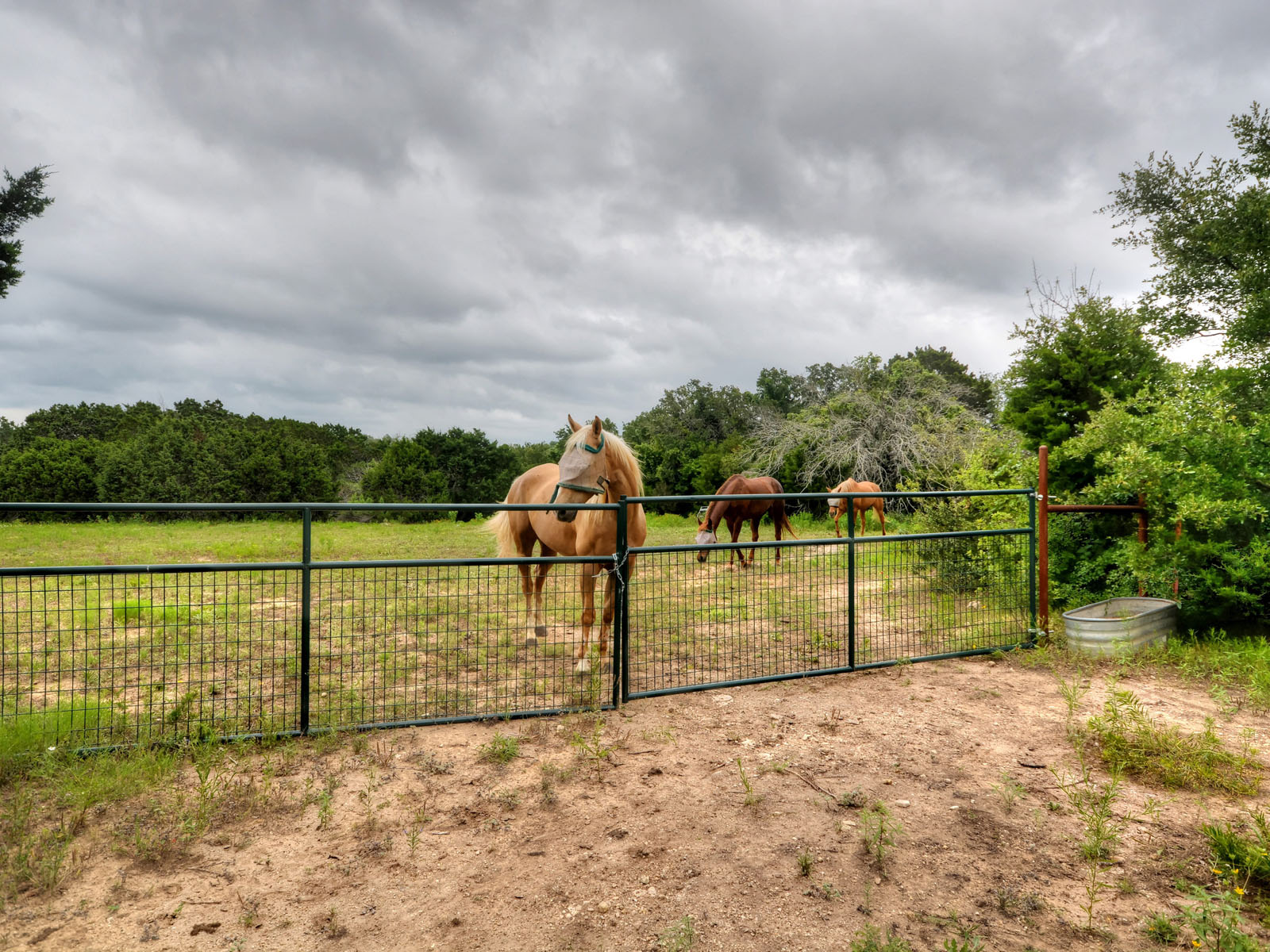 Additional photo for property listing at Entertain, Ride and Hunt Without Leaving Home 301 Lookout Dr Liberty Hill, Texas 78642 Estados Unidos