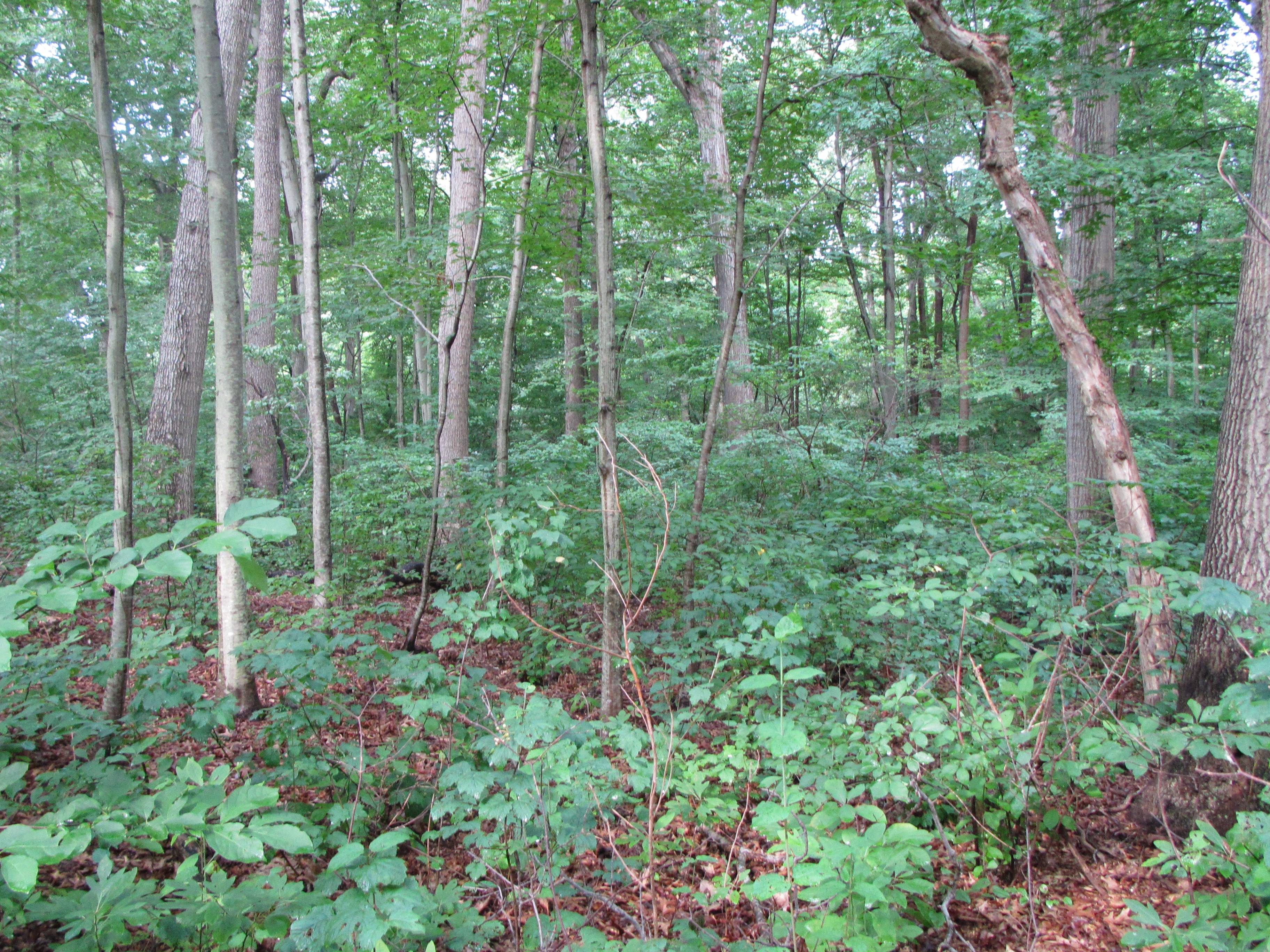 Land for Sale at Land 522 Long Beach Rd Nissequogue, New York 11780 United States
