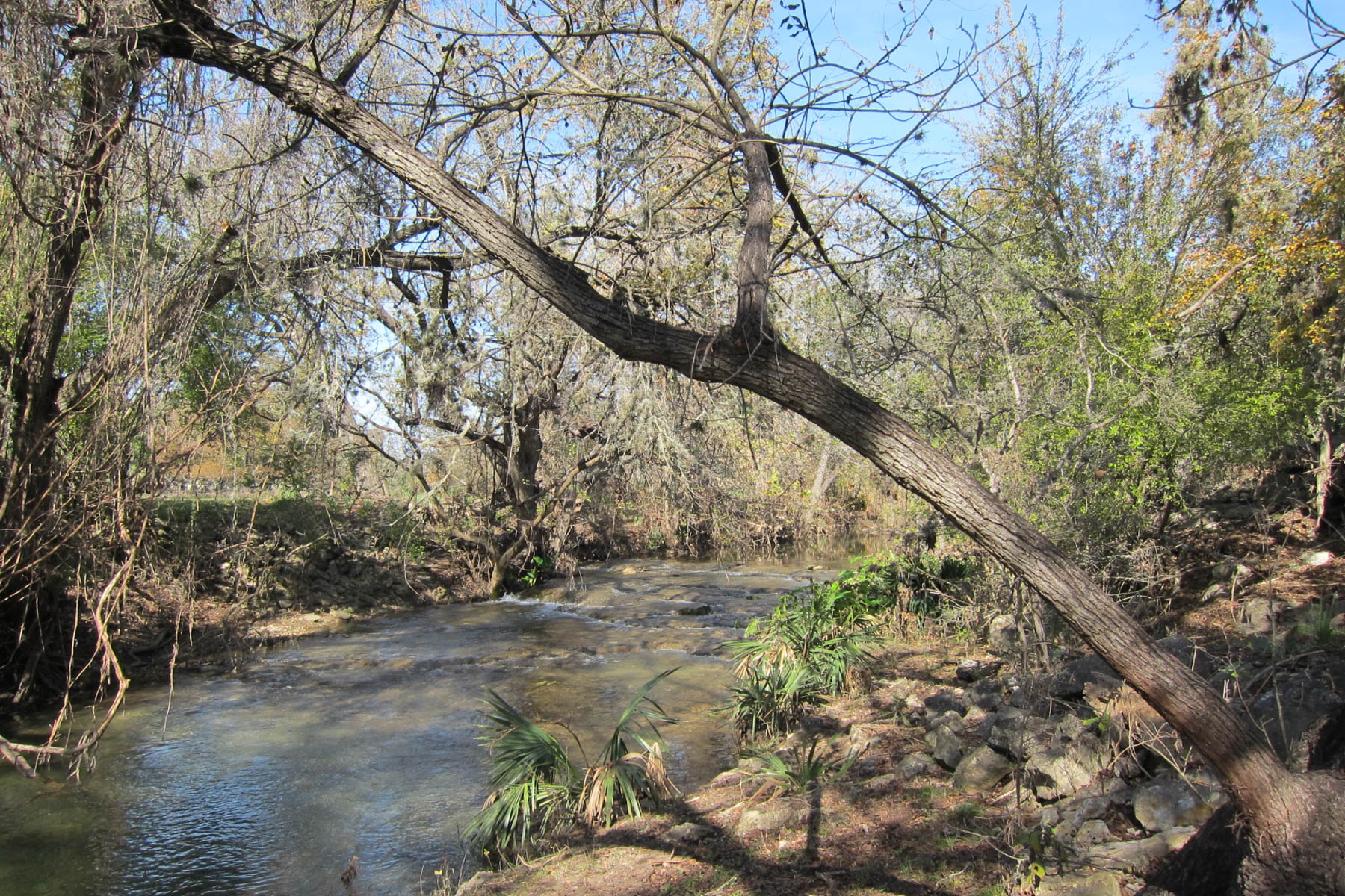Land for Sale at Spring-Fed Creek Waterfront Lot 209 Rittiman Rd Spring Branch, Texas 78070 United States
