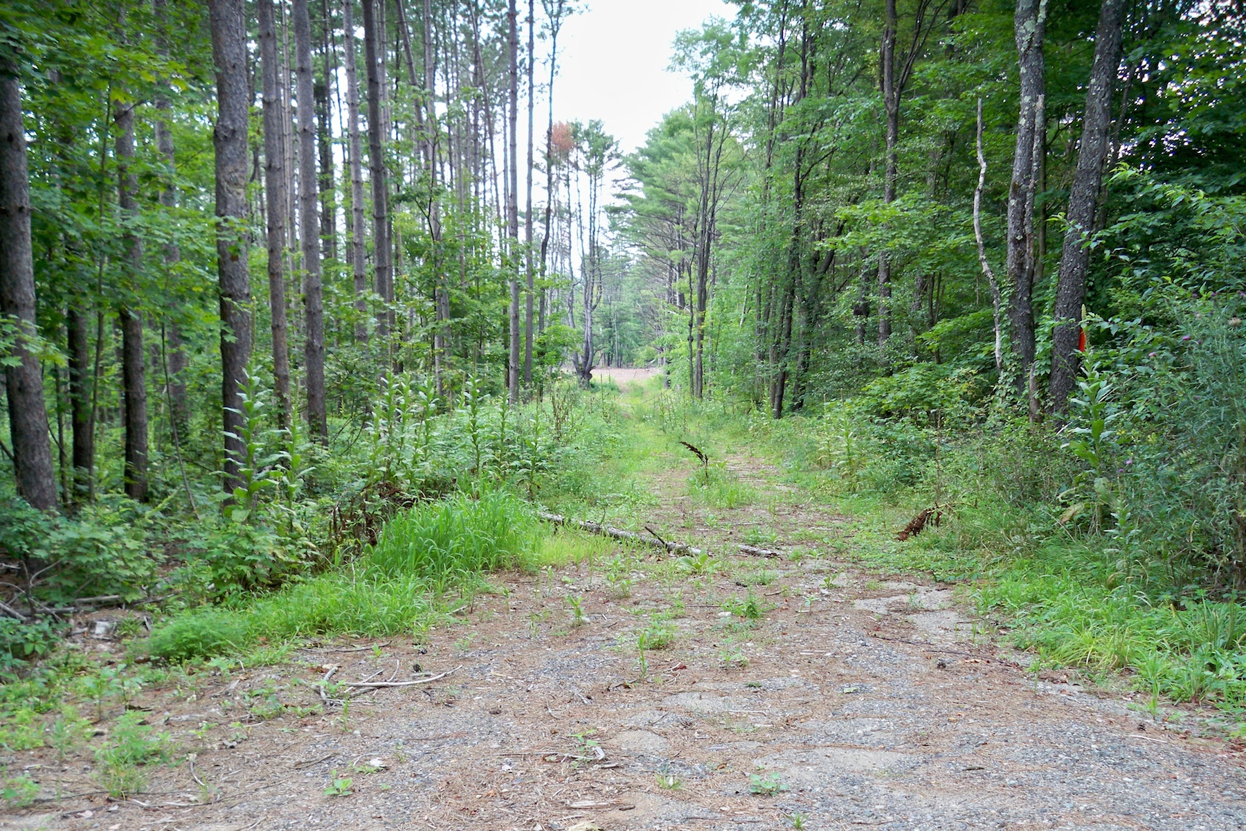 Земля для того Продажа на 87.87 Dreamy Acres in Greenfield 155 Squashville Rd Greenfield, 12833 Соединенные Штаты