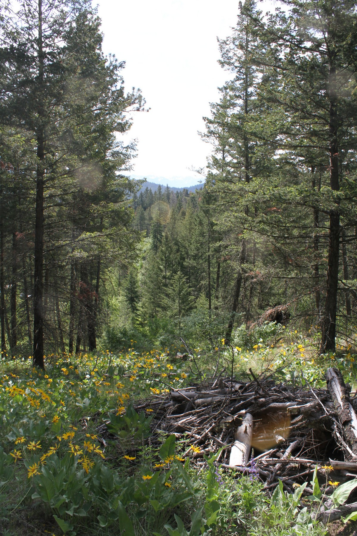 Land for Sale at White Swan Road Nhn White Swan Rd Polson, Montana, 59860 United States