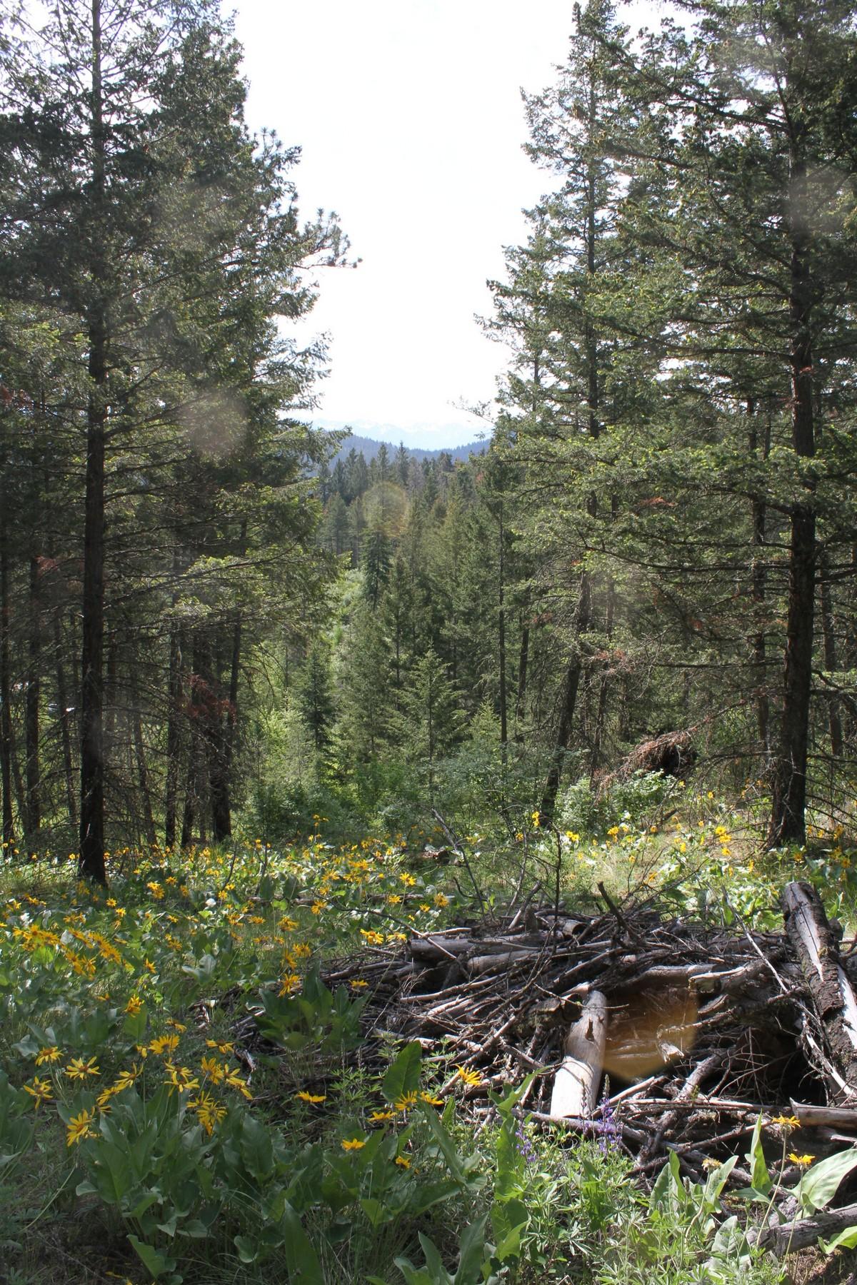 Arazi için Satış at White Swan Road Nhn White Swan Rd Polson, Montana, 59860 Amerika Birleşik Devletleri