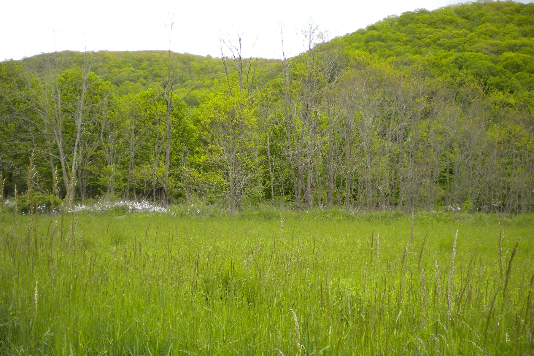 Land for Sale at TBD Balm Highway (sr 194), Banner Elk, NC 28604 TBD Balm Highway (sr 194), Banner Elk, North Carolina 28604 United States
