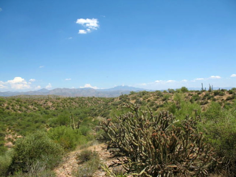Property For Sale at One of a Kind Horse Property in North Scottsdale