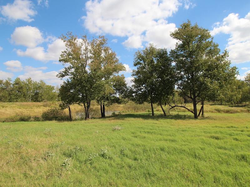 Additional photo for property listing at 445.79+- Acres  Atascosa-Wilson Co. 2629 CR 111 445.79 AC Floresville, Texas 78114 Estados Unidos