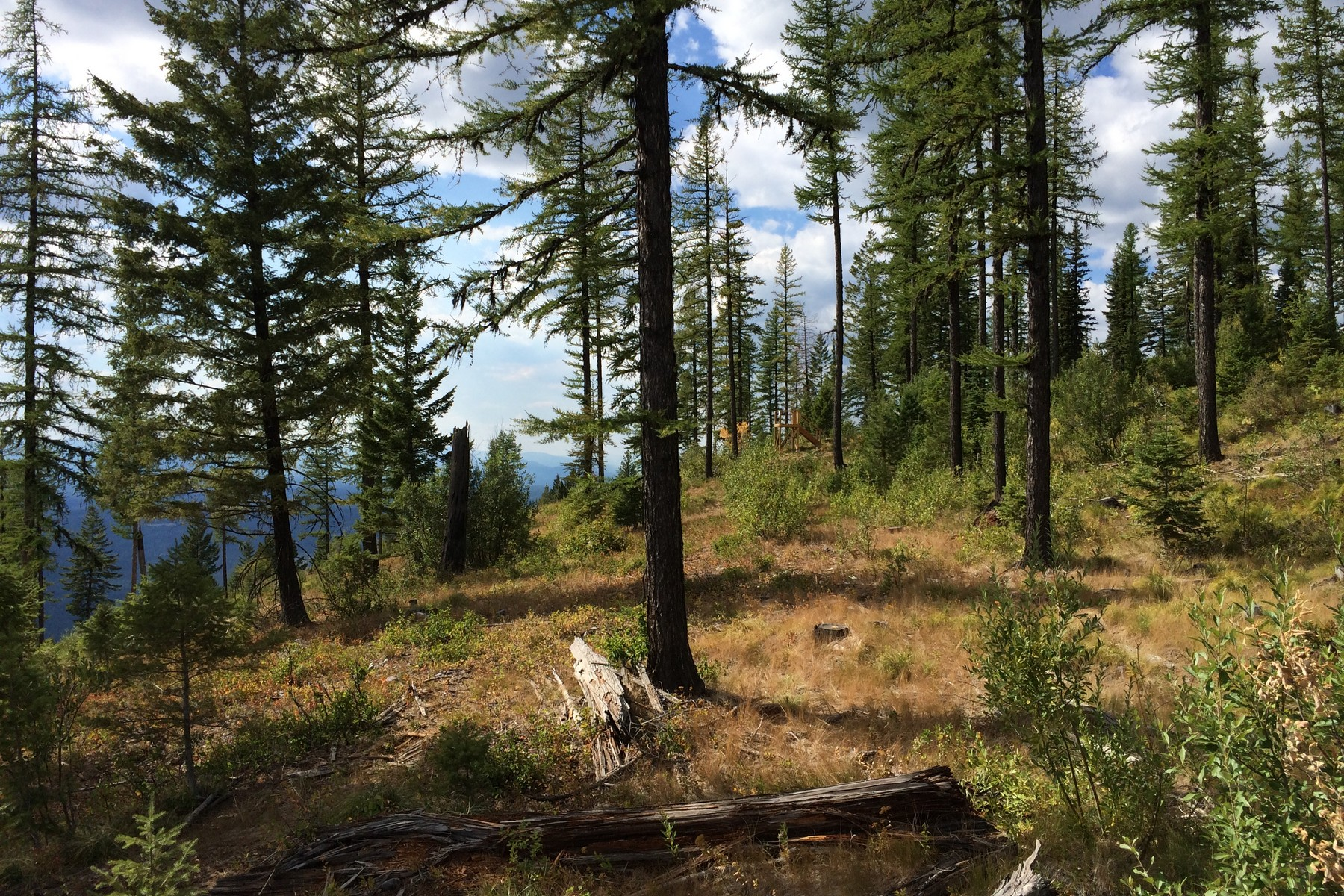 Additional photo for property listing at 137 Polar Star Dr 137  Polar Star Dr Whitefish, Montana 59937 United States