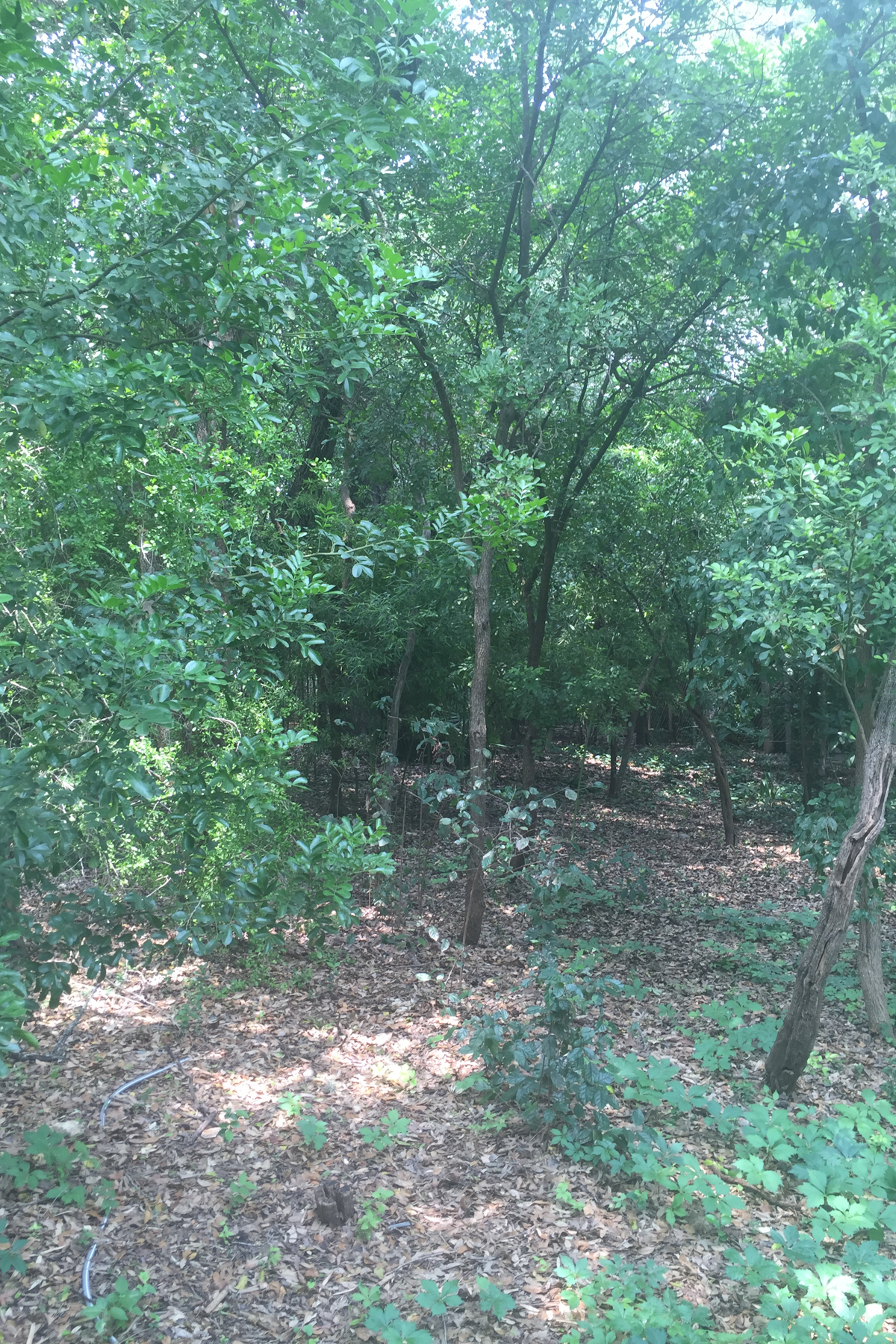 Additional photo for property listing at Gorgeous Lot in Alamo Heights 119 Grant Ave San Antonio, Texas 78209 United States
