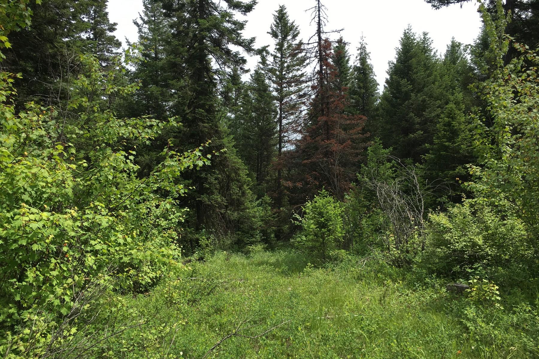 土地 為 出售 在 Antler Ridge Nhn Antler Ridge Rd Whitefish, 蒙大拿州, 59937 美國