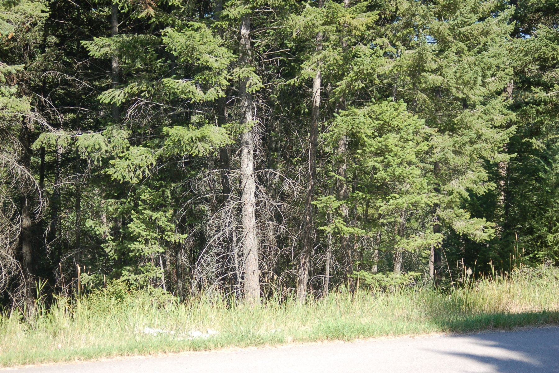 Additional photo for property listing at 169 Wulff Ln , Lakeside, MT 59922 169  Wulff Ln Lakeside, Montana 59922 United States