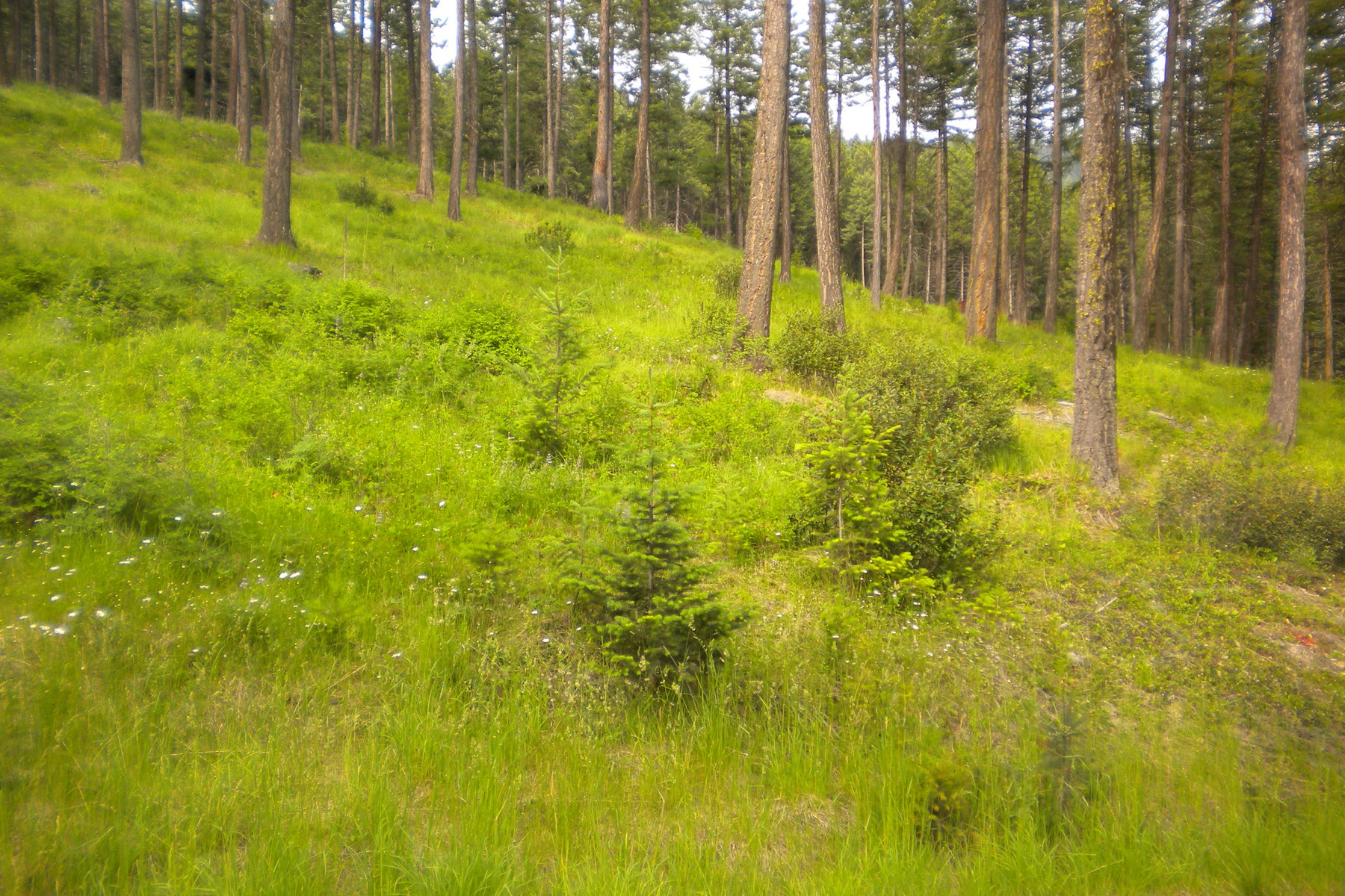 Additional photo for property listing at Jette Lake Lot Nhn  Jette Lake Rd Polson, Montana 59860 United States