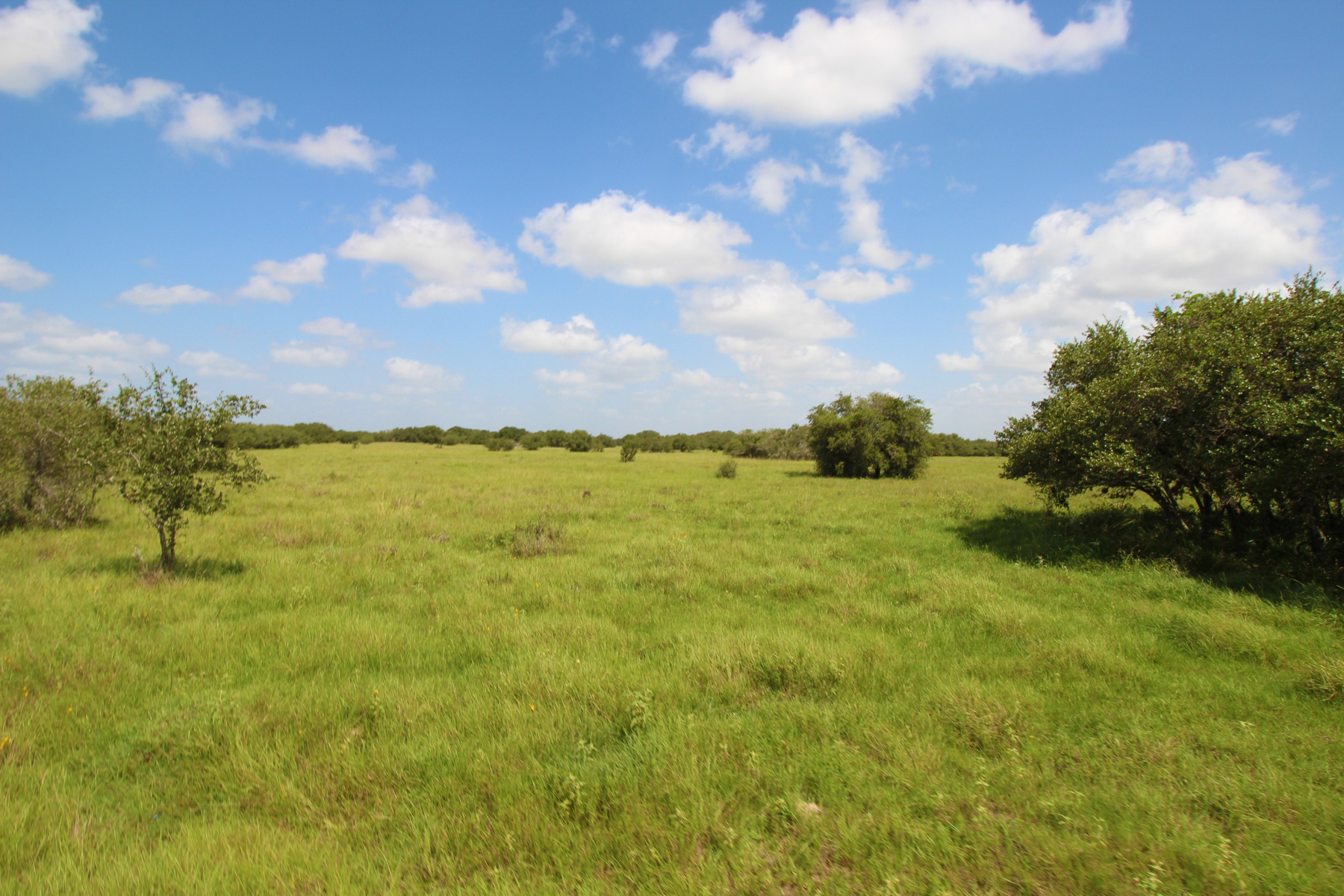 Additional photo for property listing at 894+/- Acrew Tri-County Ranch 894+/- AC / Tri-County Ranch ou Victoria, Texas 77901 United States