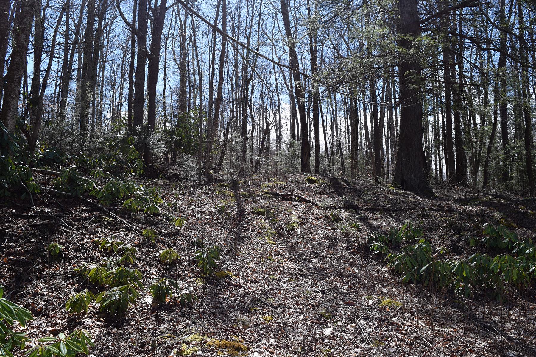 Terreno por un Venta en LINVILLE - THE VILLAGE AT GRANDFATHER TBD Linville River Lane (lot 42) Linville, Carolina Del Norte, 28646 Estados Unidos