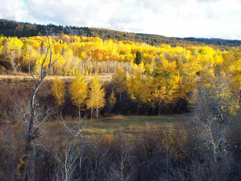 2.5 + Acre Sites - Fox Creek Canyon