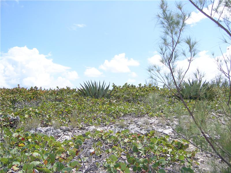 Additional photo for property listing at Ocean Front Residential Lot Rainbow Bay, Eleuthera Bahamas
