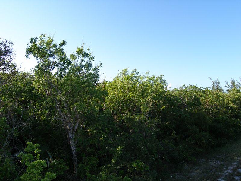 Land for Sale at Windermere Property- Lot 183 Windermere Island, Eleuthera Bahamas