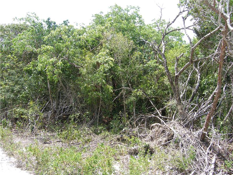 Additional photo for property listing at Eleuthera Island Shores Lot Eleuthera Island Shores, Gregory Town, Eleuthera Bahamas