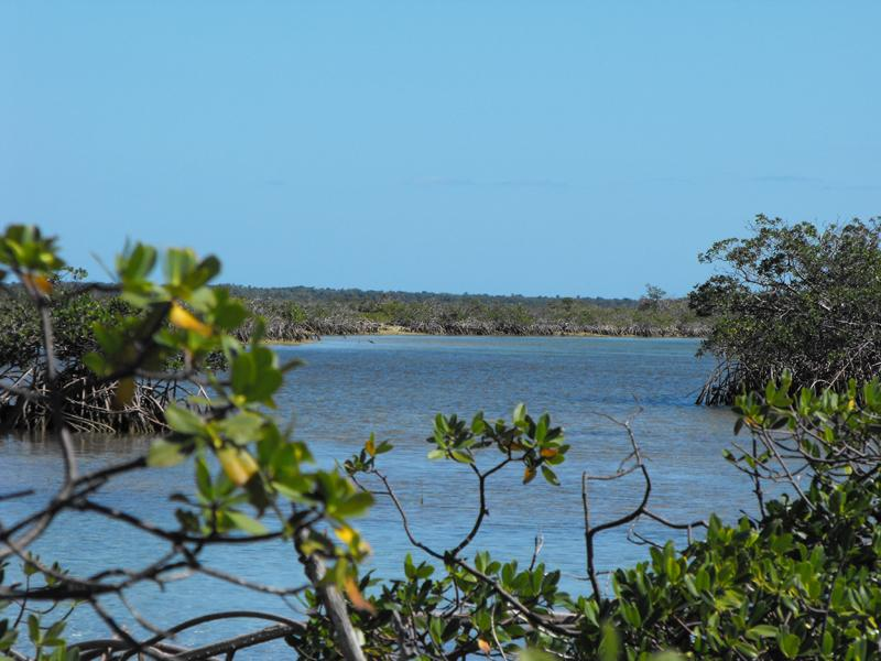 Land for Sale at Cedar Harbour Coopers Town, Abaco Bahamas