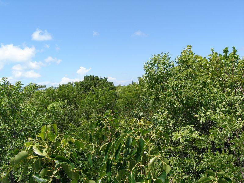 Land for Sale at Lot near Ten Bay Beach- Lot 22 Savannah Sound, Eleuthera Bahamas