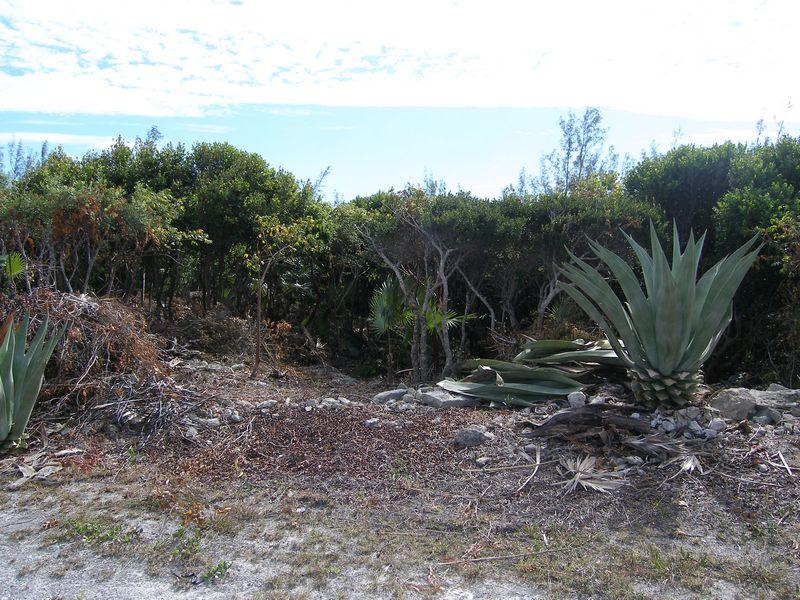Additional photo for property listing at Groomed Residential Lot Wandering Shore Drive Rainbow Bay, Eleuthera . Bahamas