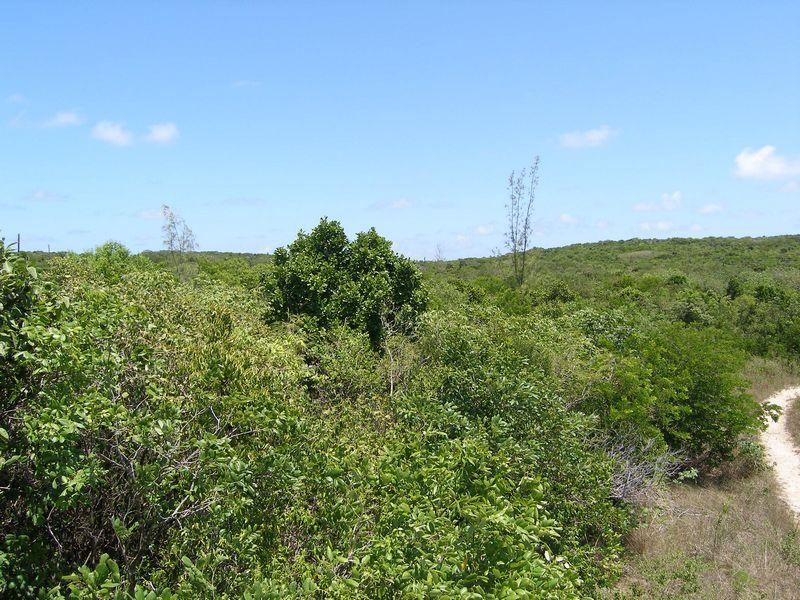 Land for Sale at Lot near Ten Bay Beach- Lot 21 Eleuthera Island Club, Savannah Sound, Eleuthera Bahamas