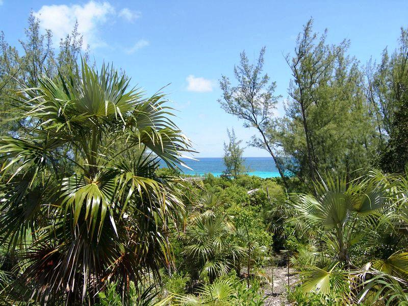 Additional photo for property listing at Lots 158 & 164- Windermere Beach Estates Windermere Island, Eleuthera Bahamas