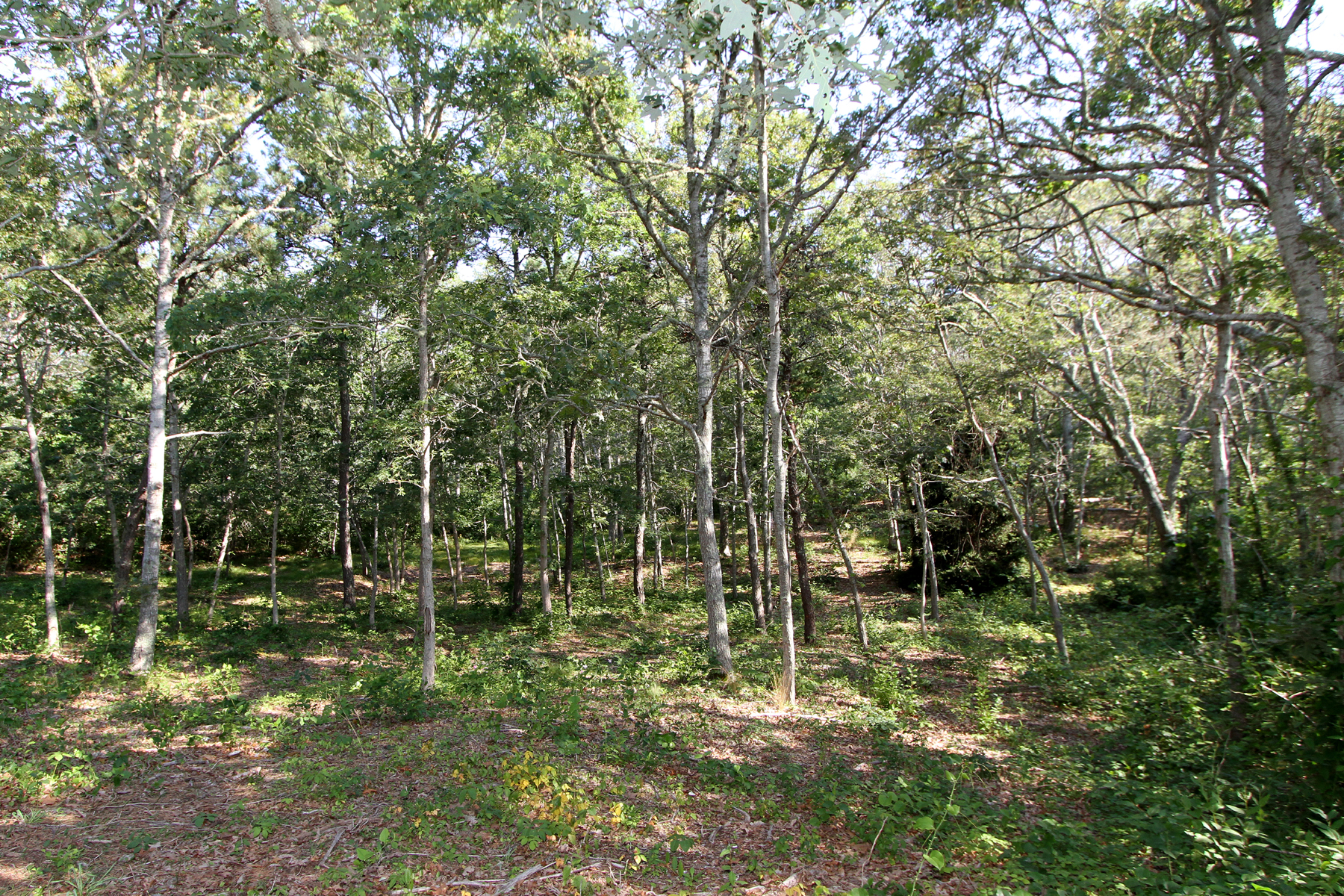 Property For Sale at PASTORAL LAND - HARWICH