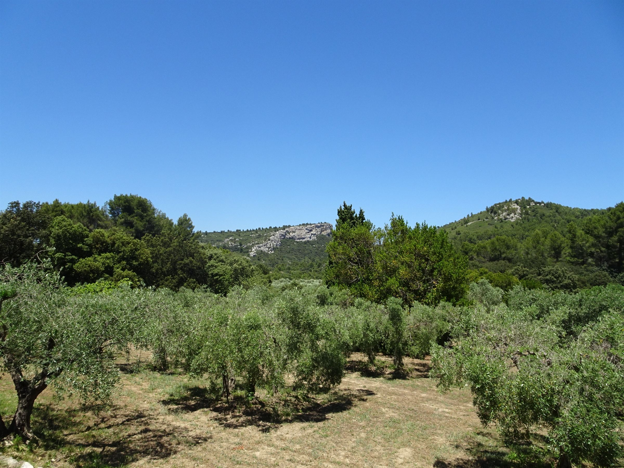 sales property at Typical farmhouse close to Les Baux de Provence and Maussane les Alpilles