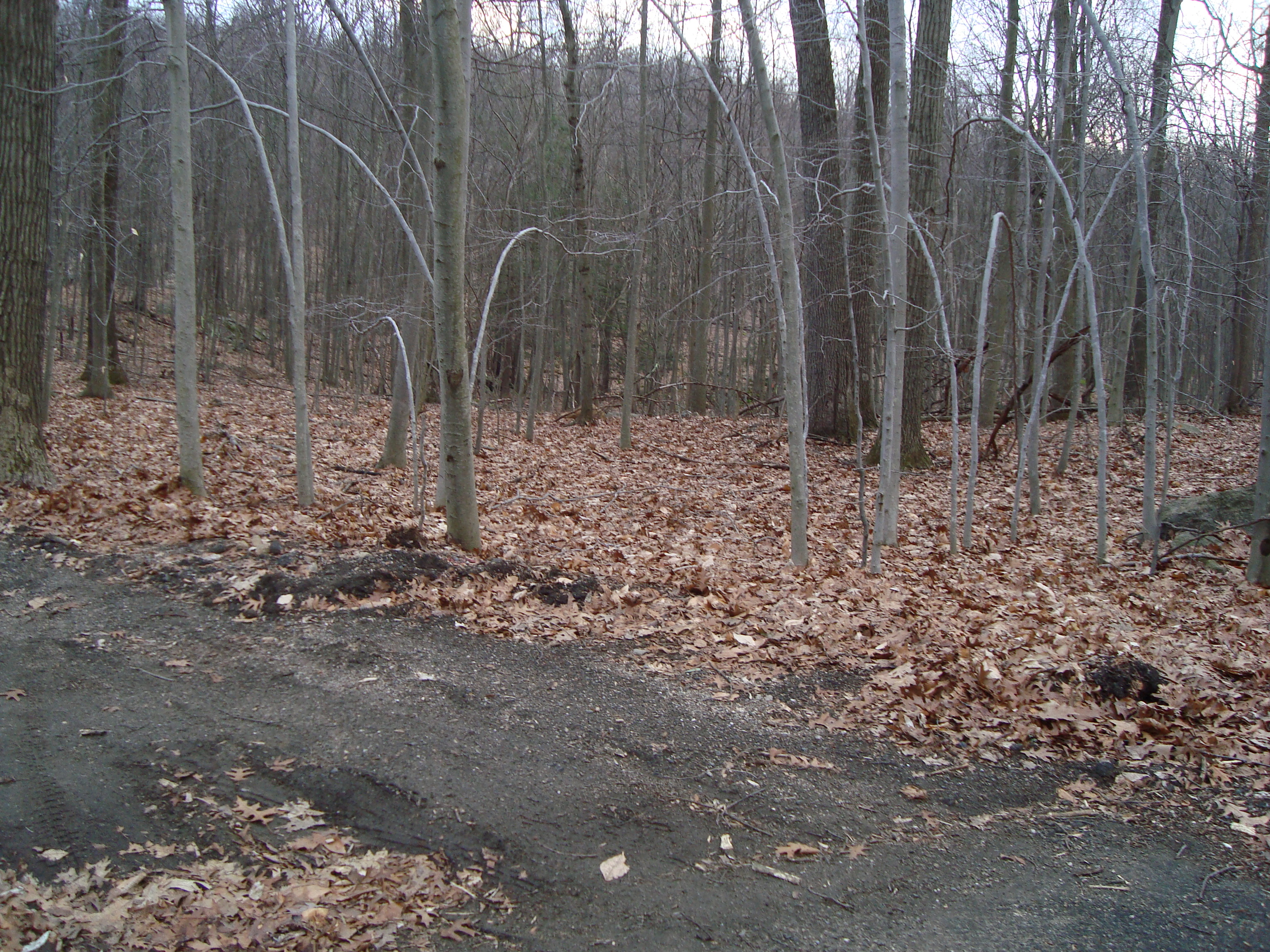 Land for Sale at Lan At the End Of A Country Road 46 Long Meadow Lane Bethel, Connecticut, 06801 United States