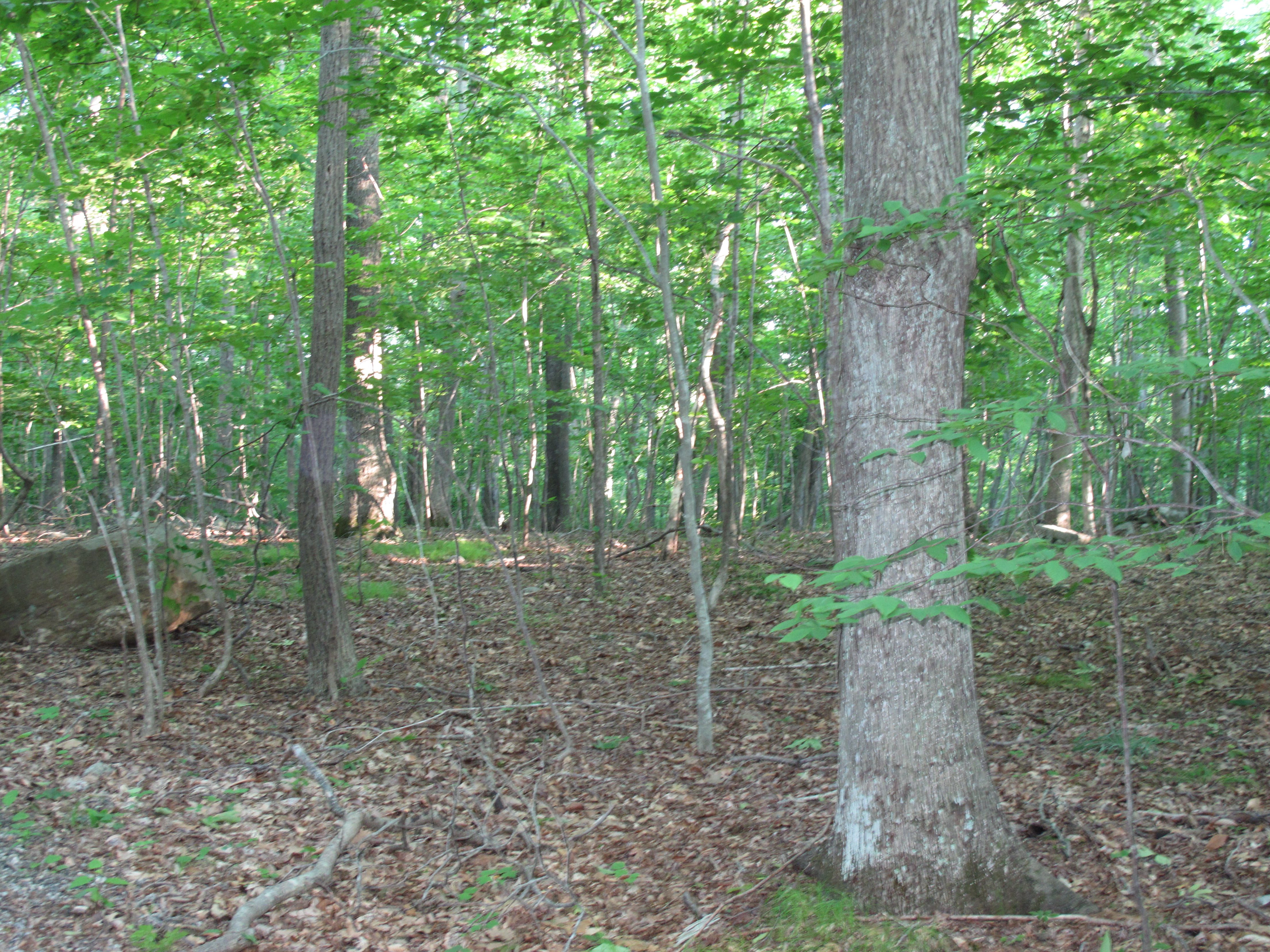 Land for Sale at Lot 17-3 Murray Lane Guilford, Connecticut, 06437 United States