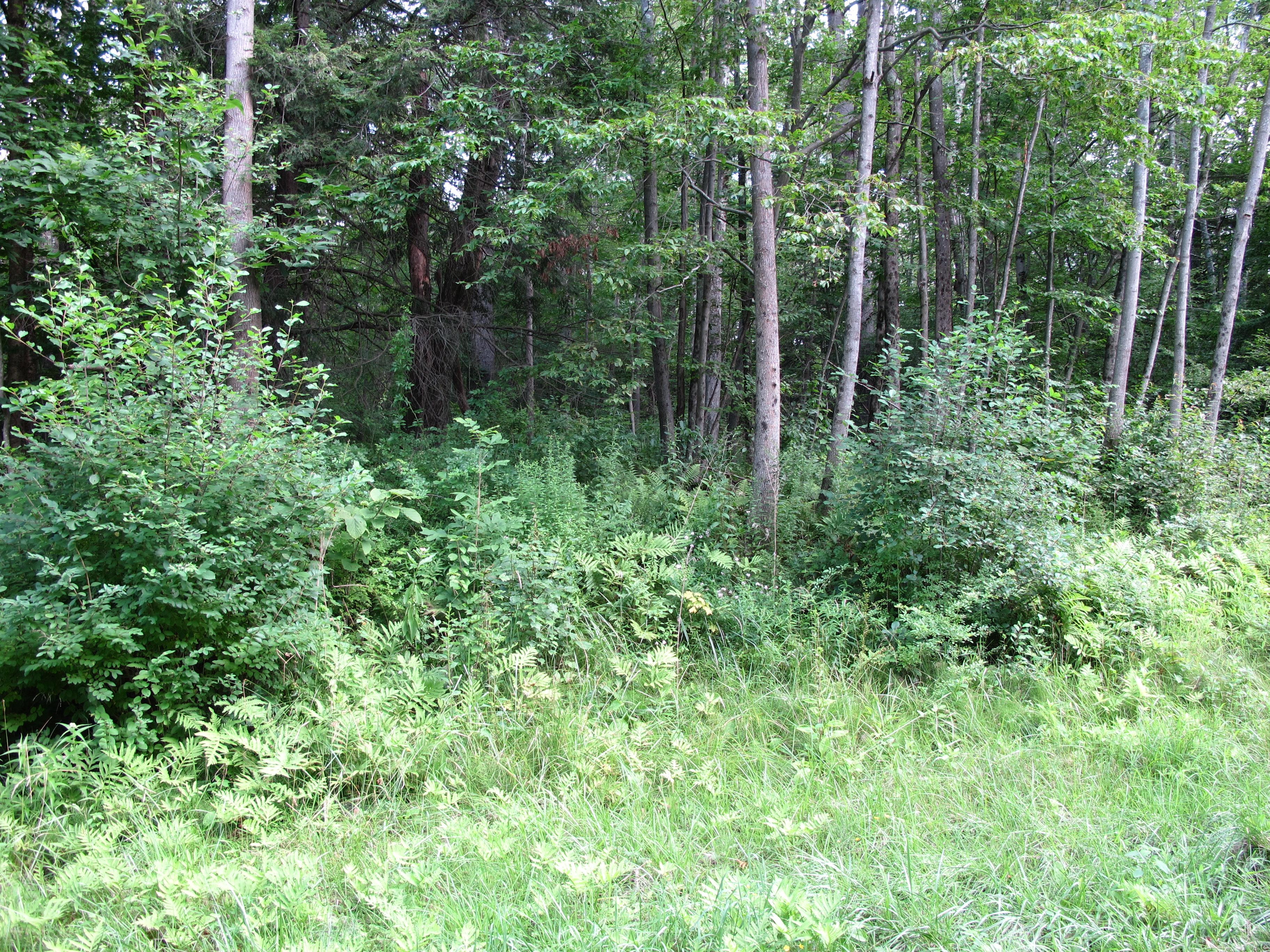 Земля для того Продажа на Southwest-Facing Woodridge Lake Homesite 0 East Hyerdale Dr. Goshen, Коннектикут 06756 Соединенные Штаты