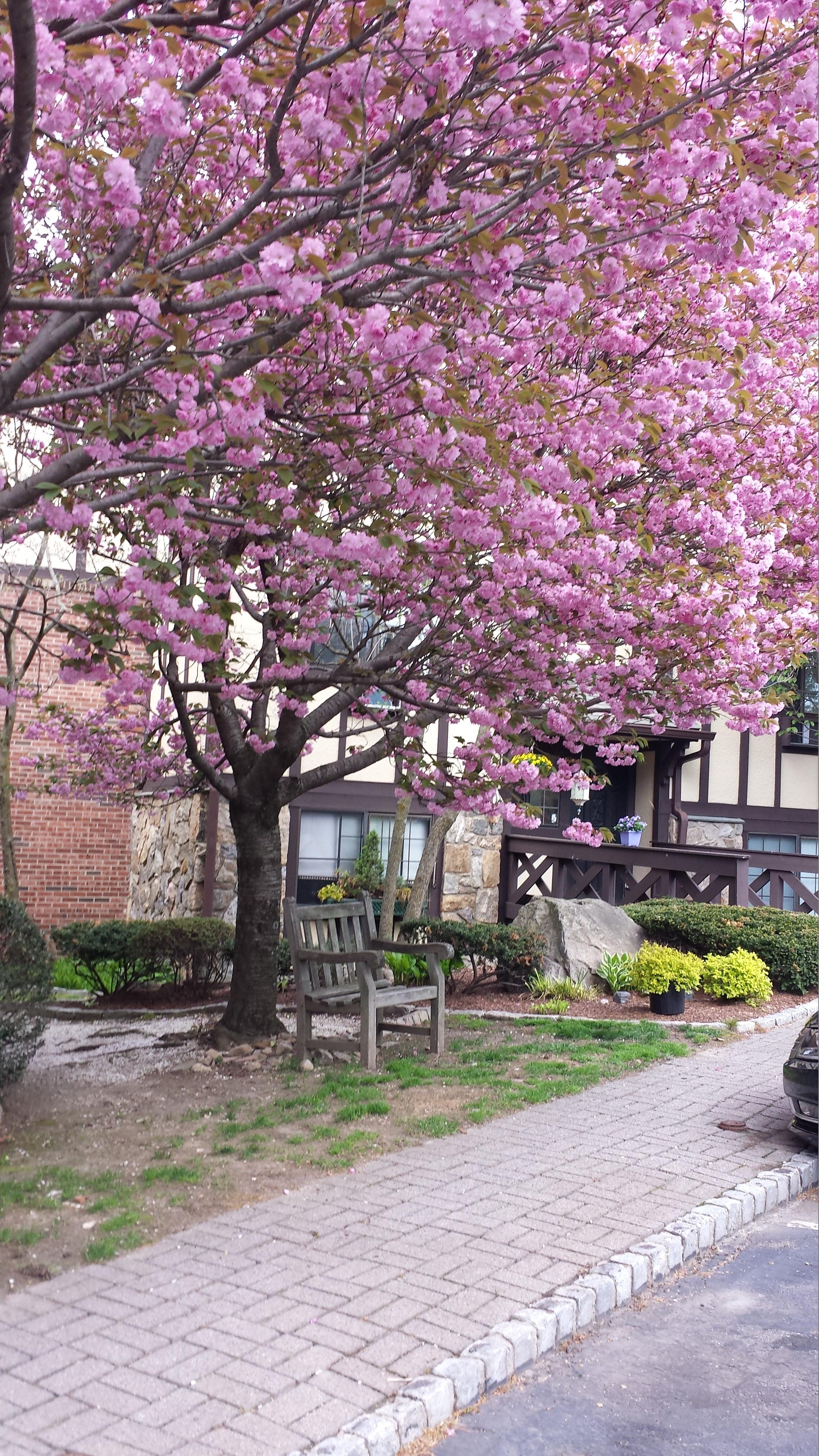 Condominium for Sale at 50 Aiken Street 50 Aiken Street 441 Norwalk, Connecticut, 06851 United States