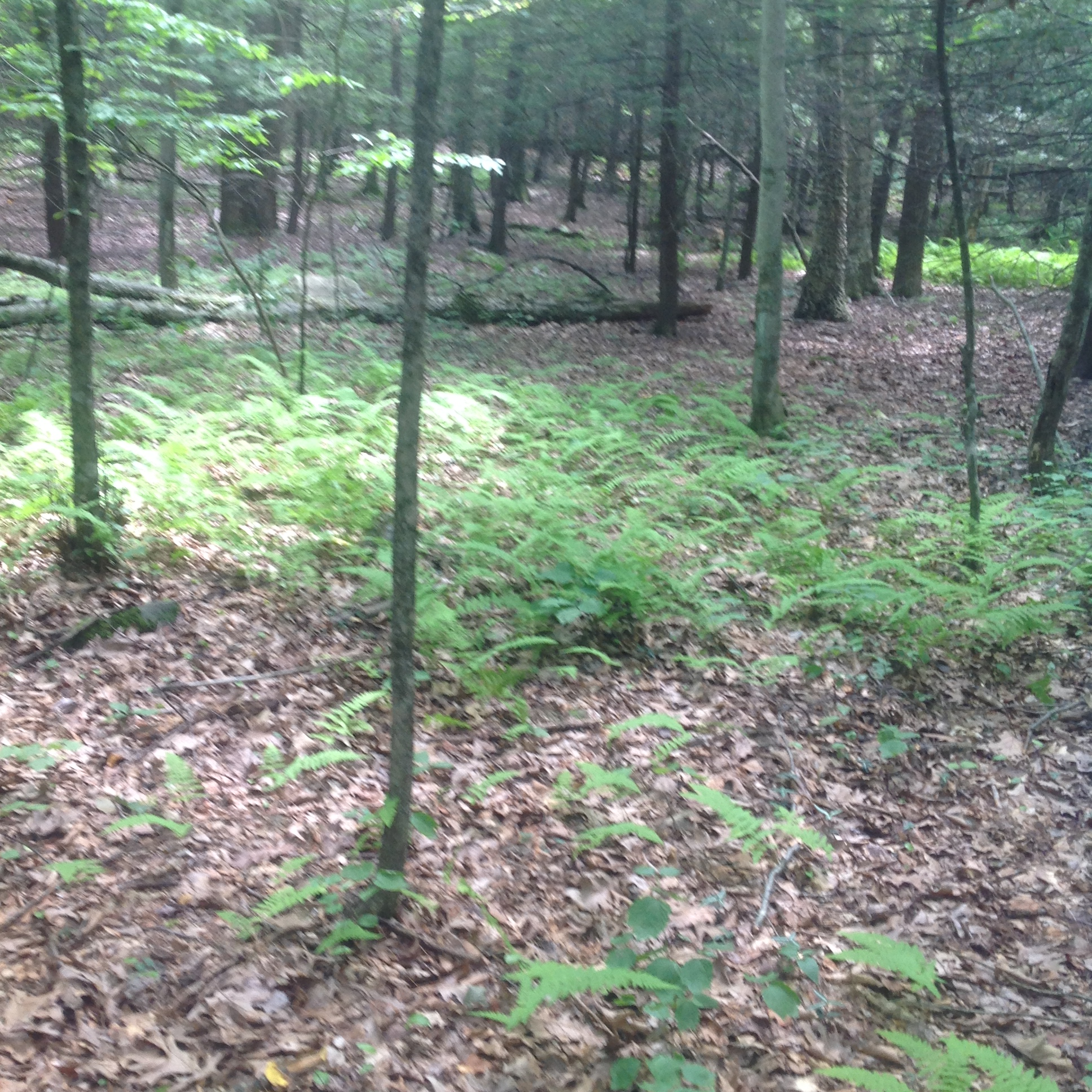 Land for Sale at White Deer Rocks Land 00 White Deer Rocks Rd Woodbury, Connecticut, 06798 United States