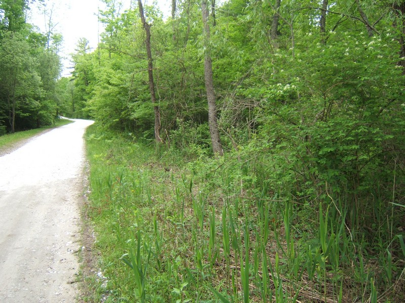 Land for Sale at Quiet Life Amidst the Wildlife! 2 Birch Lane Lot 1 Sharon, Connecticut 06069 United States