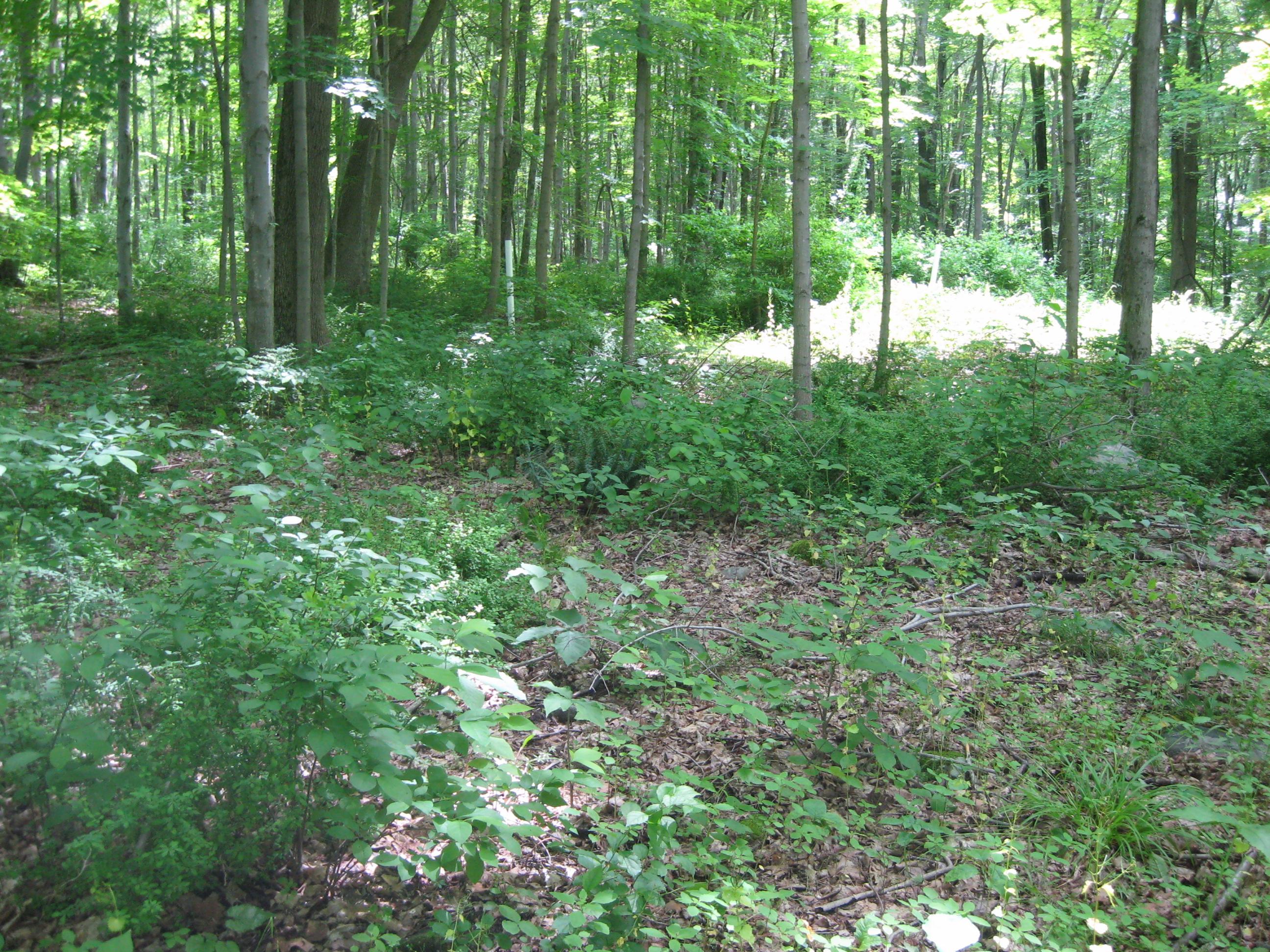 土地 のために 売買 アット Beautiful Wooded Acreage Bartholomew Hill Road Goshen, コネチカット, 06756 アメリカ合衆国