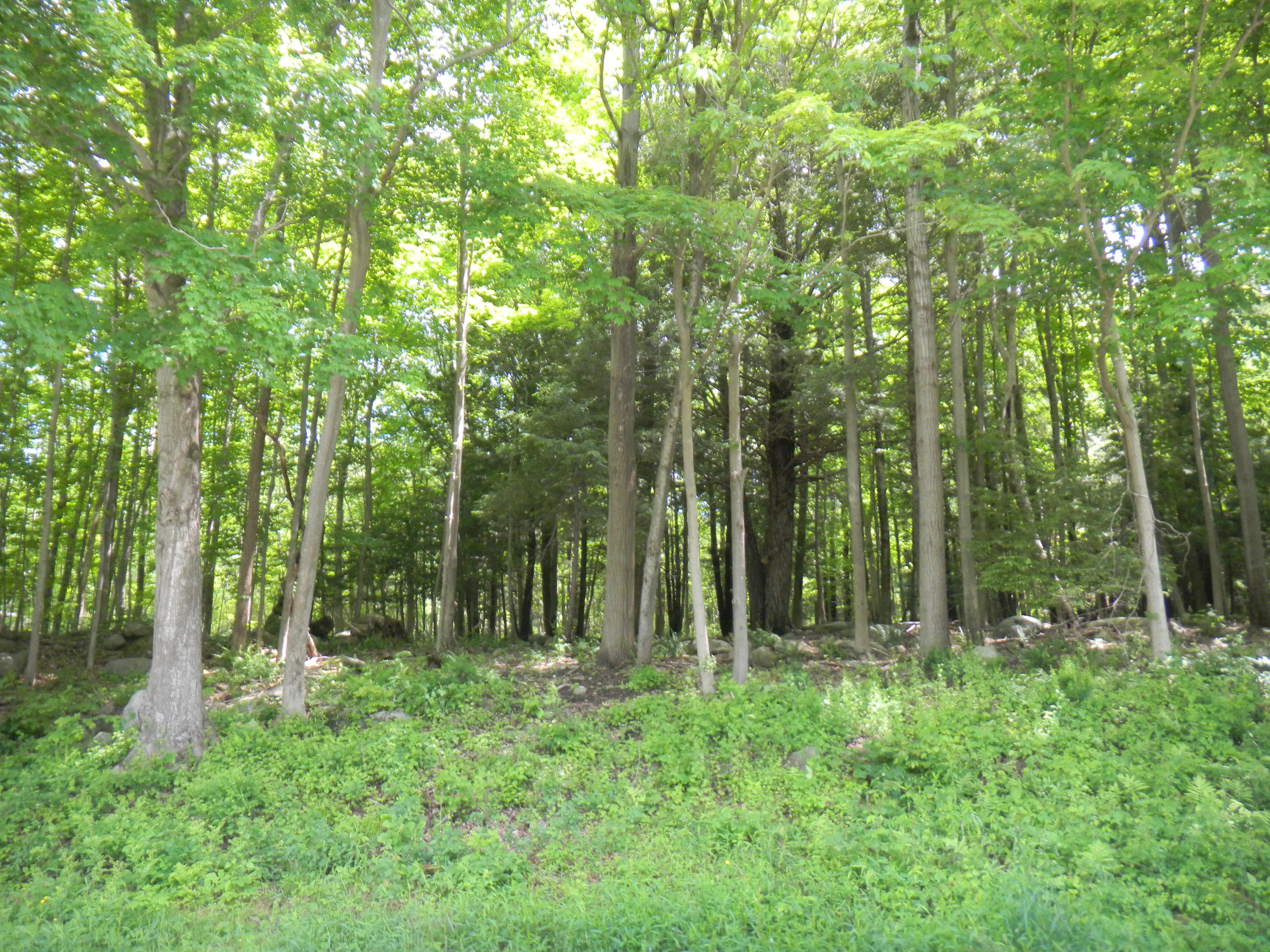Земля для того Продажа на Great Goshen Lot East Hyerdale Dr Goshen, Коннектикут 06756 Соединенные Штаты