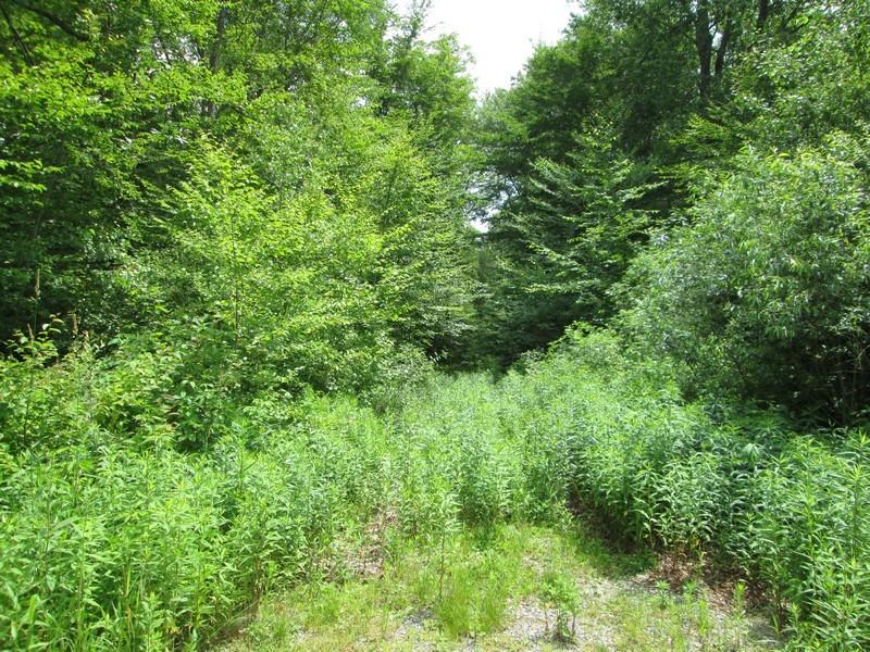 Terreno por un Venta en 14 Acres on the End of a Cul-de-sac Litchfield Hollow Lot 4 Litchfield, Connecticut 06759 Estados Unidos