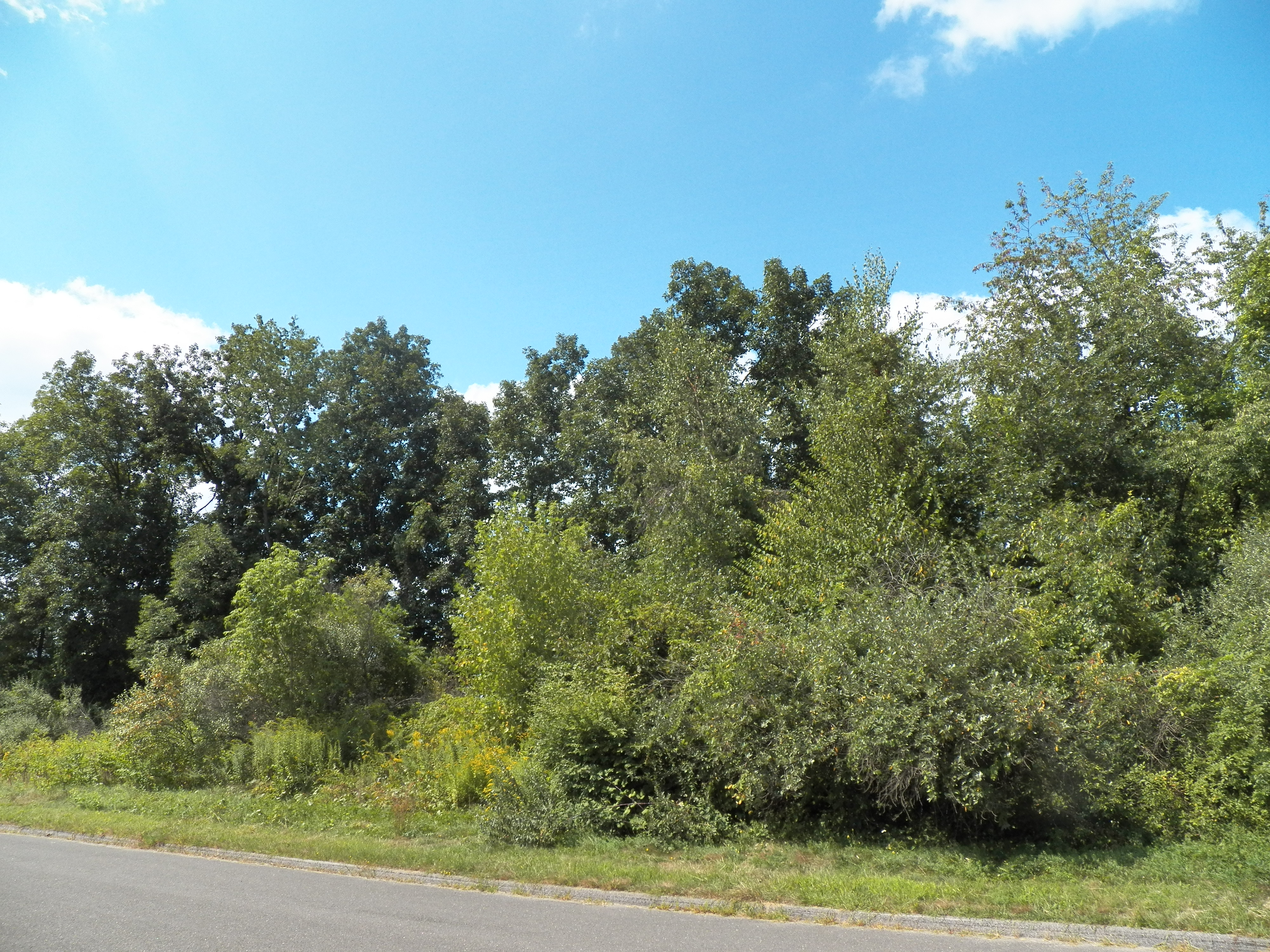 Land for Sale at Quiet Cul De Sac 25 Stone Oak Dr New Milford, Connecticut 06776 United States