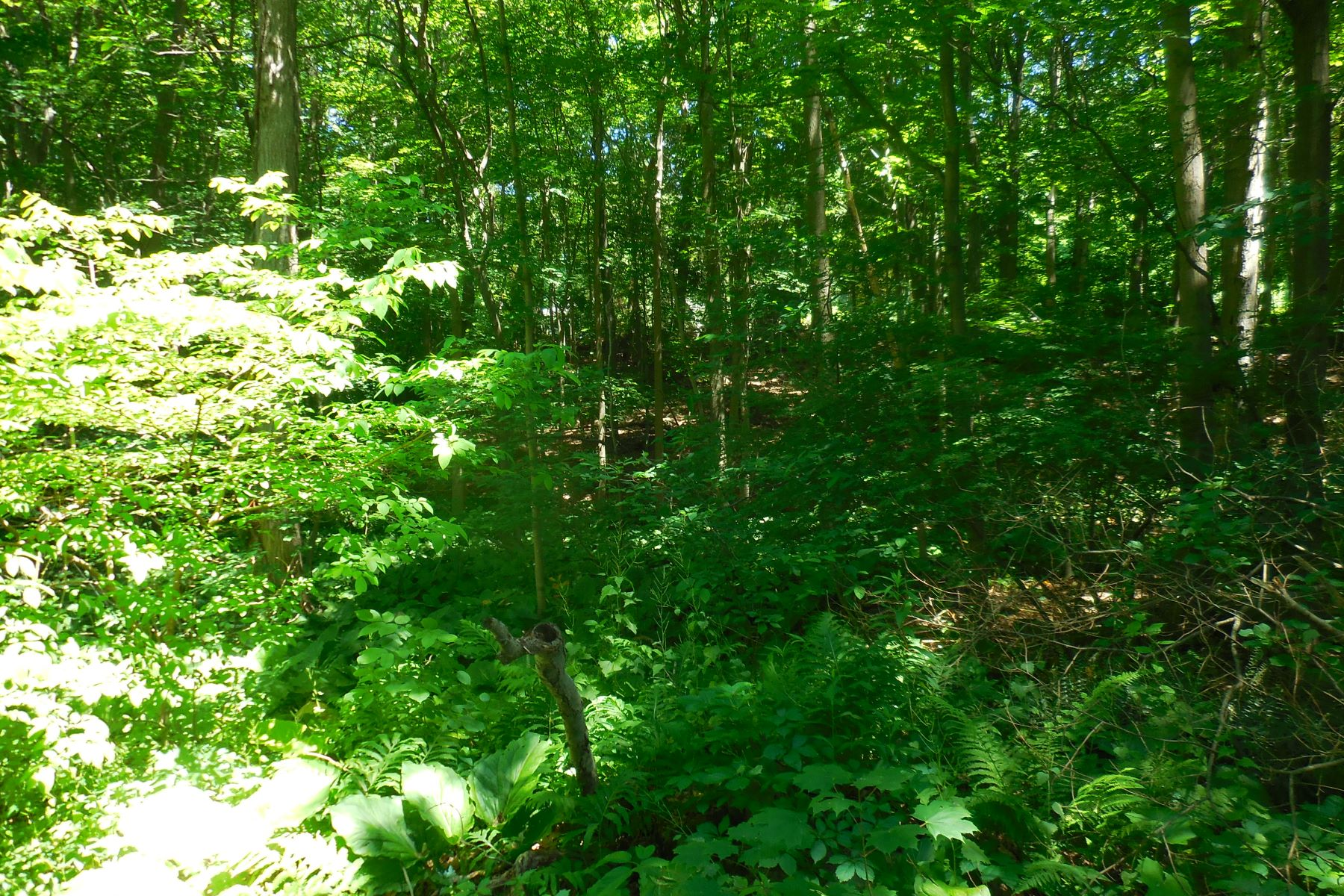 Land for Sale at Land 3 Peralta Street New Fairfield, Connecticut 06812 United States