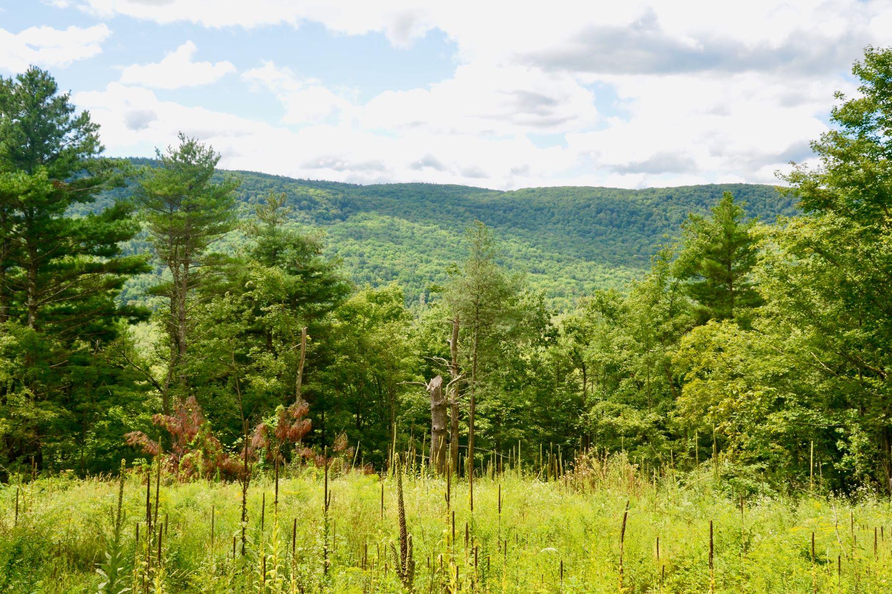 土地,用地 为 销售 在 87 Acres with Tyringham Valley Views 3 Main Rd, 蒂林厄姆, 马萨诸塞州 01264 美国