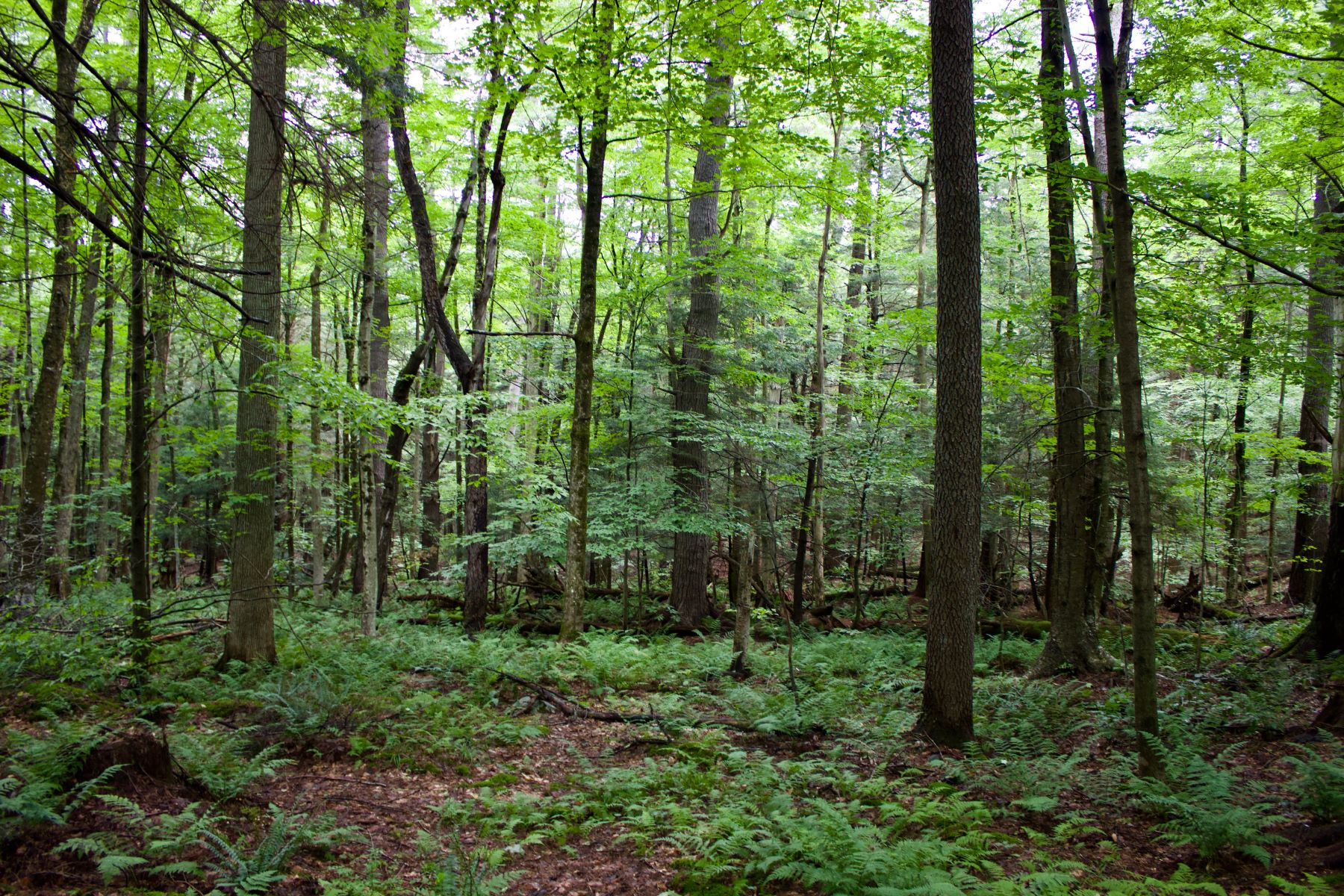 Land for Sale at Build your Private Retreat 00 Laurel Way Norfolk, Connecticut 06058 United States