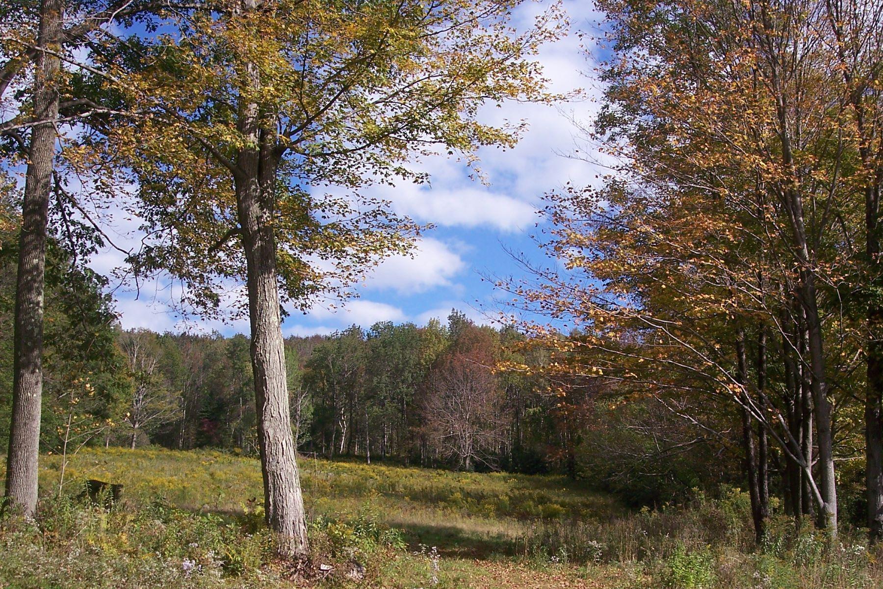 Land for Active at 10 Plus Acres Bordering 12,000 Plus Acres of State Lands Main St Lanesboro, Massachusetts 01237 United States