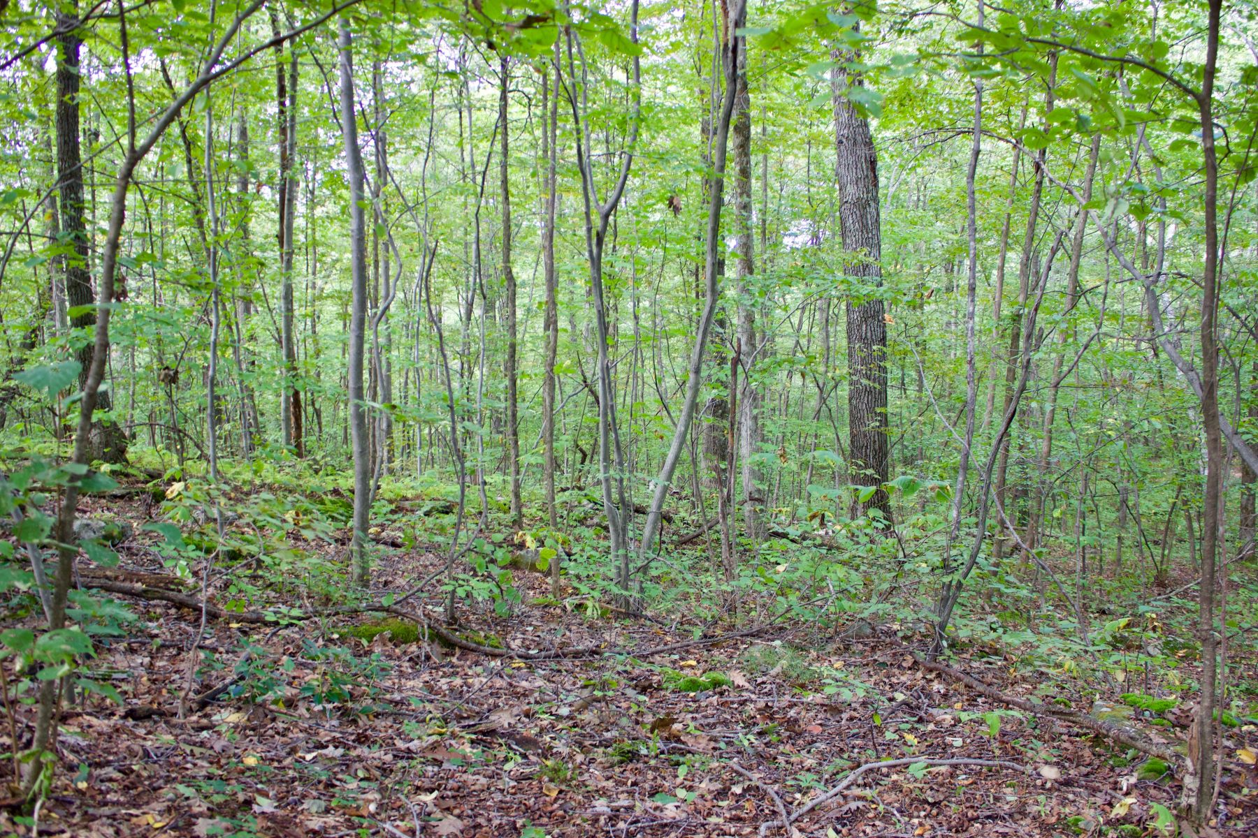Terreno per Vendita alle ore A lovely wooded and gently rolling parcel 19 Old Paddock Lane Kent, Connecticut 06757 Stati Uniti