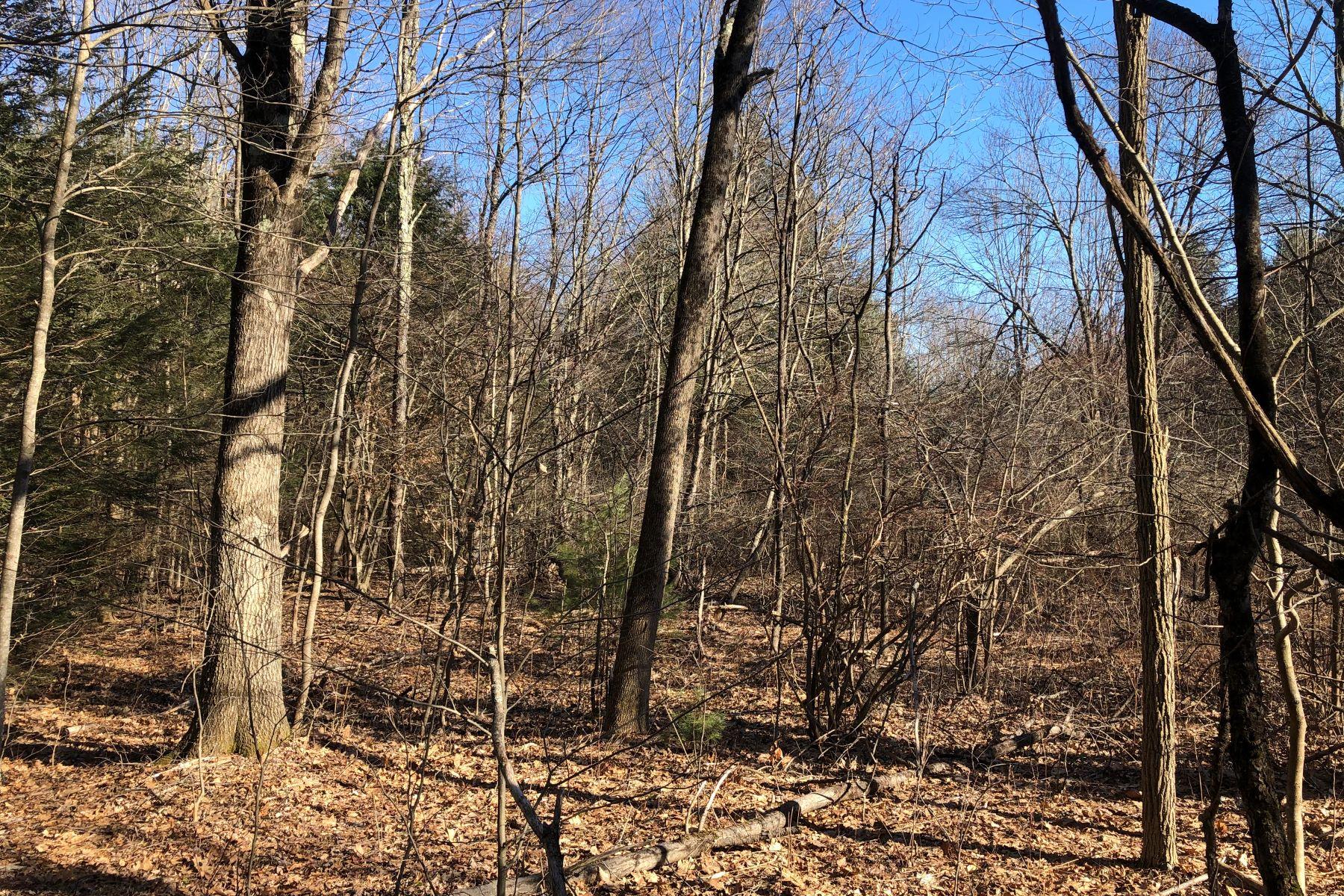 أراضي للـ Sale في 22 acres which offers an old cabin site 1187 Litchfield Road, Norfolk, Connecticut 06058 United States