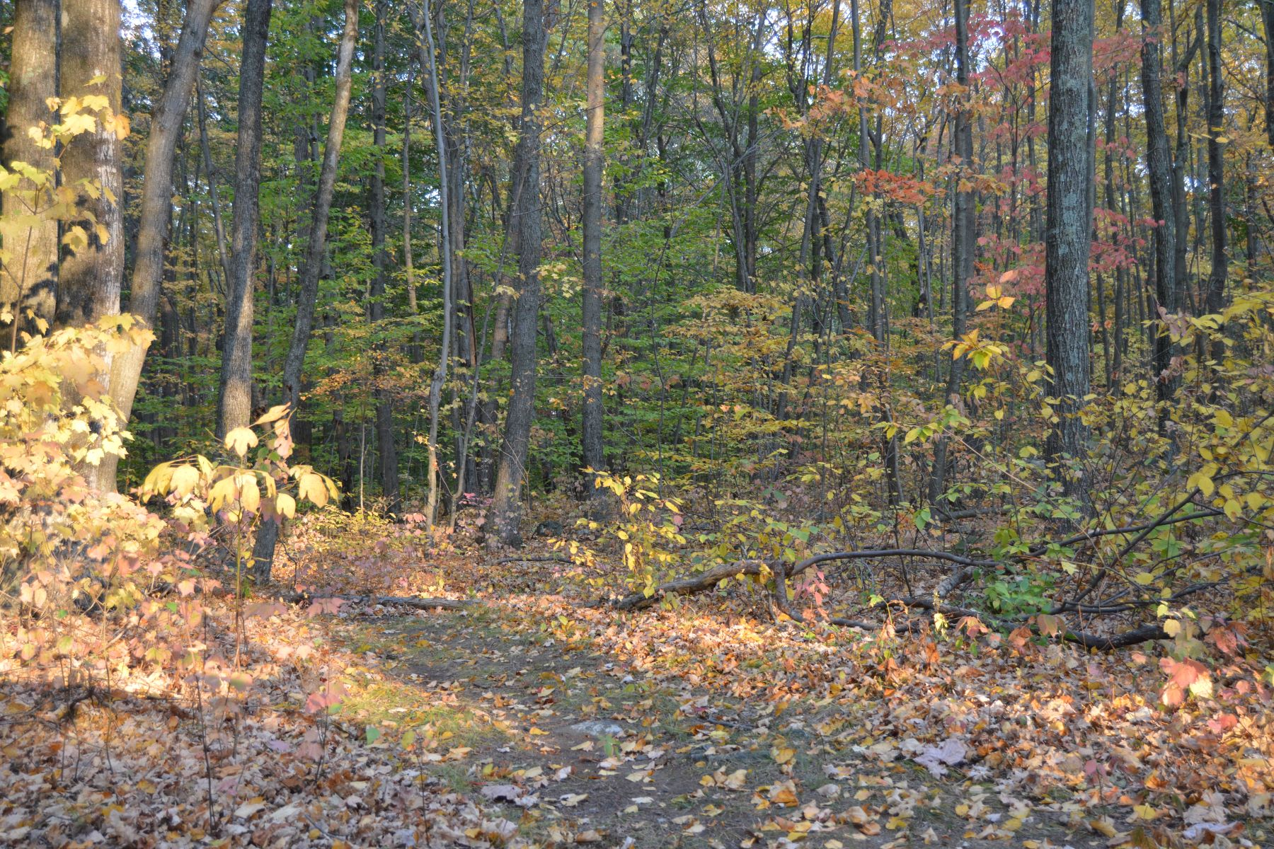 Land for Sale at Level, Wooded Lot 88 Quail Run Road, Woodbury, Connecticut, 06798 United States