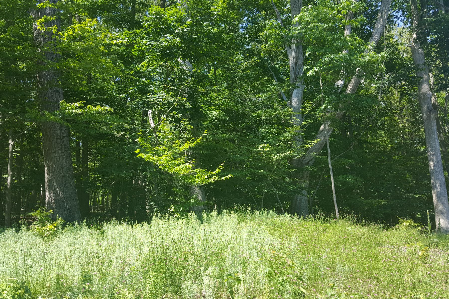 Land for Sale at Great Hill Road Great Hill Road Guilford, Connecticut 06437 United States