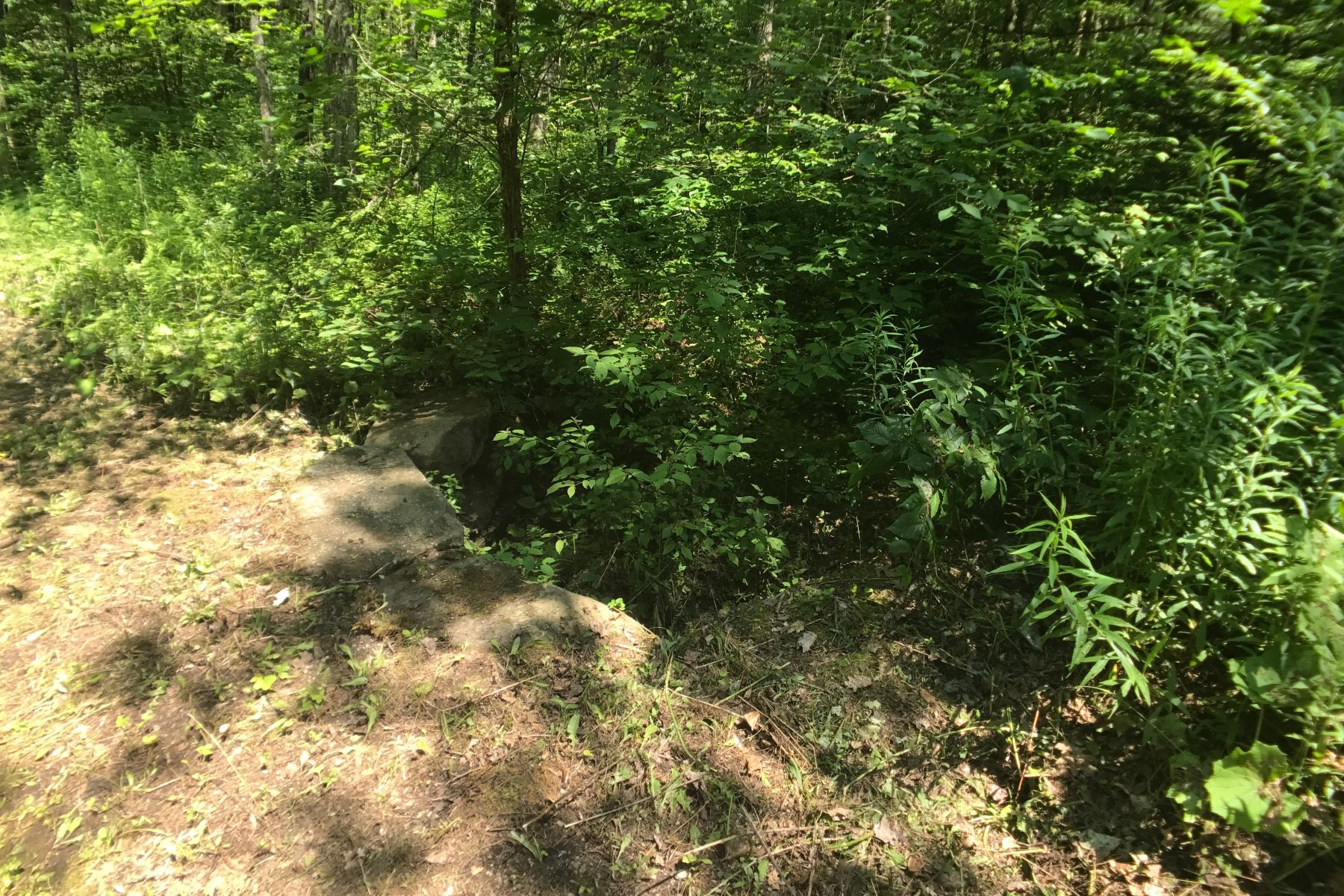 Additional photo for property listing at Private Wooded Building Lot in Tyringham Main Rd Tyringham, Massachusetts 01264 United States